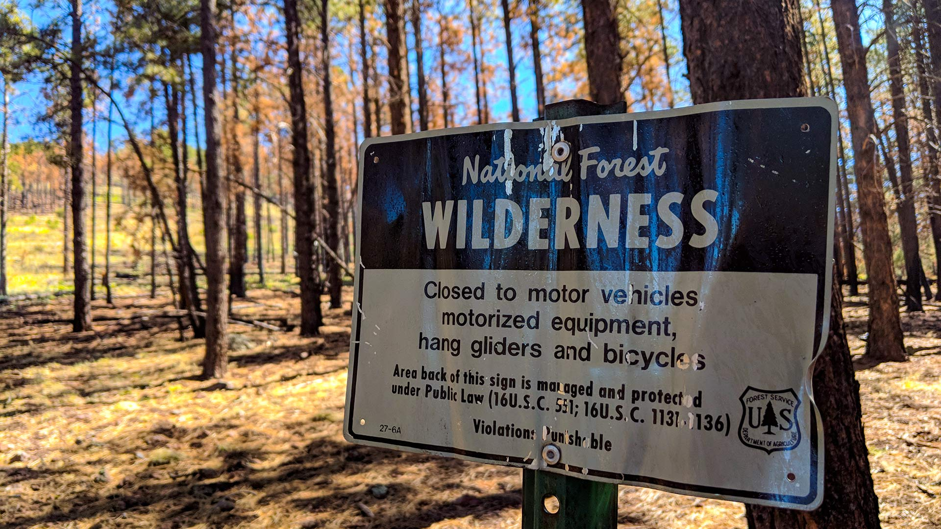 A National Forest wilderness sign in the the Kaibab National Forest, near Kendrick Peak in Northern Arizona.