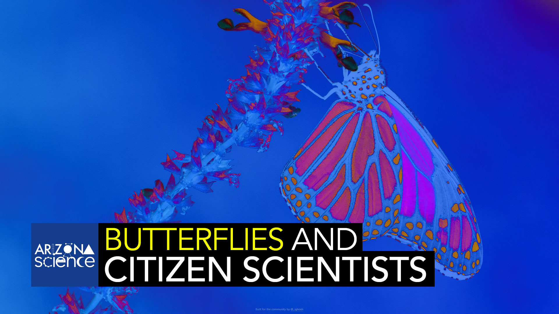 Citizen scientists are providing crucial field data on butterflies and pollination.
