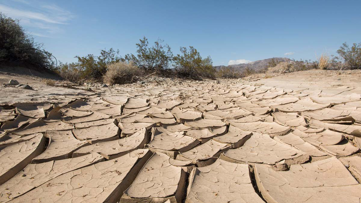Cracked earth in the Joshua Tree National Park, where the National Park Service says severe drought and warming temperatures will likely affect the populations and home ranges of many species.