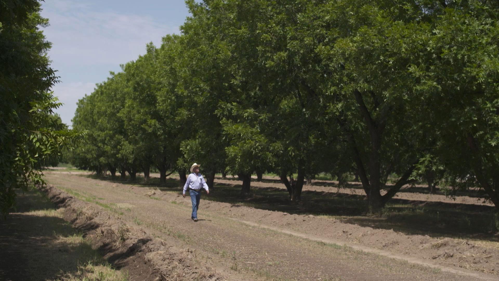 Farmers Investment Co. president Dick Walden walks through his company's pecan farm.