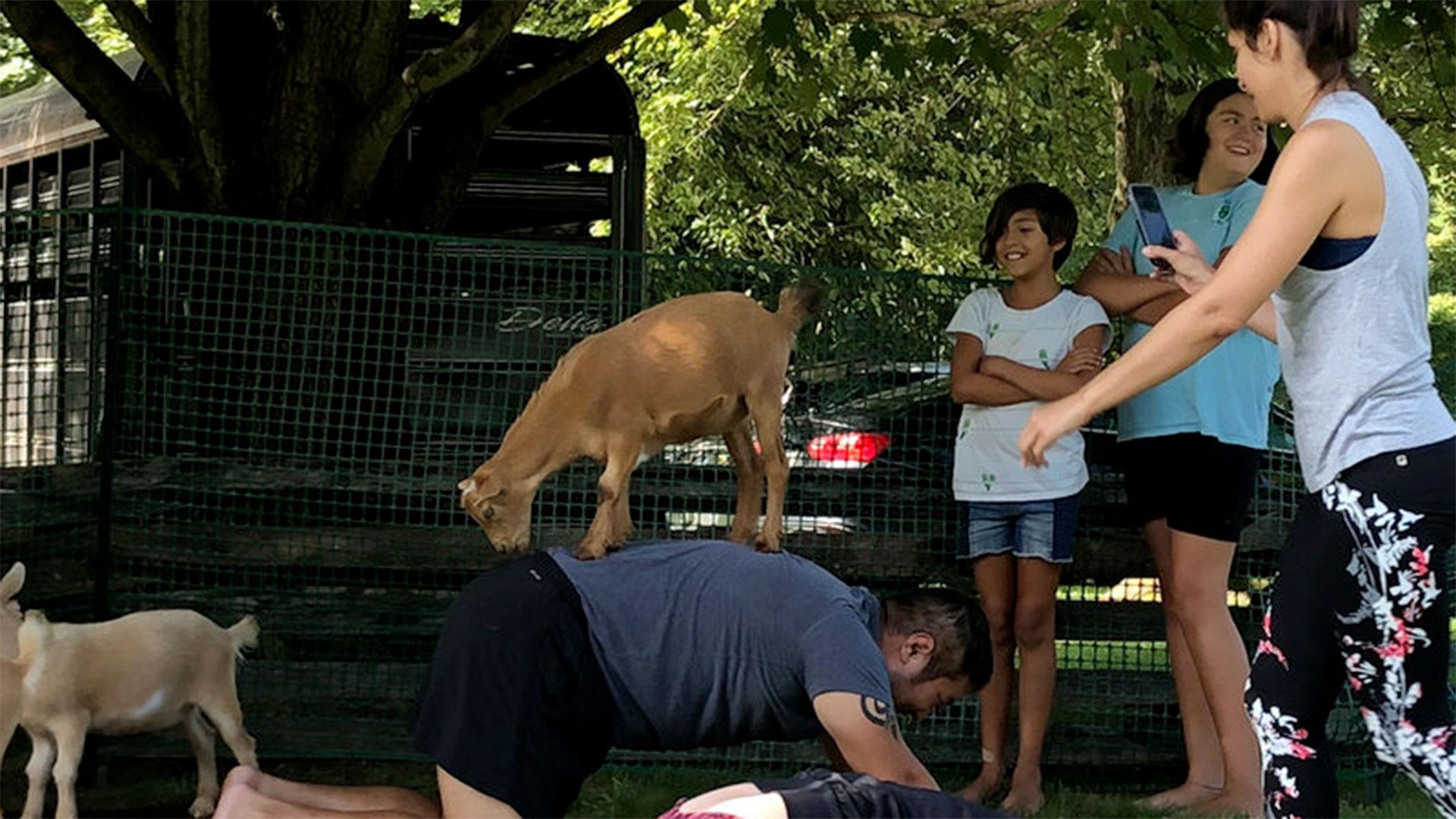 goat_yoga_standing_on_back_hero
