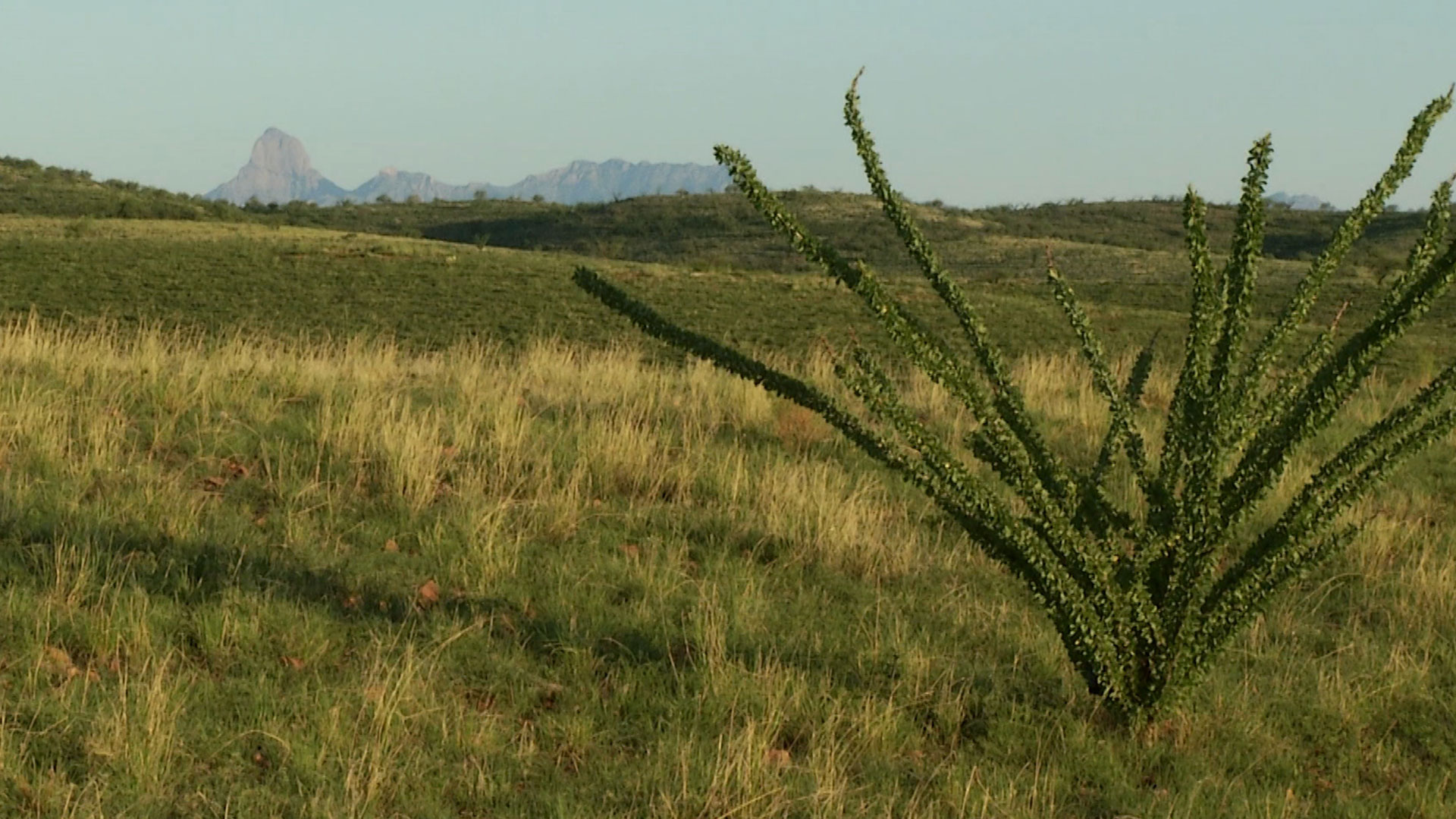 Baboquivari Peak, the most sacred site for the Tohono O'odham people, can be seen from many parts of Buenos Aires National Wildlife Refuge.