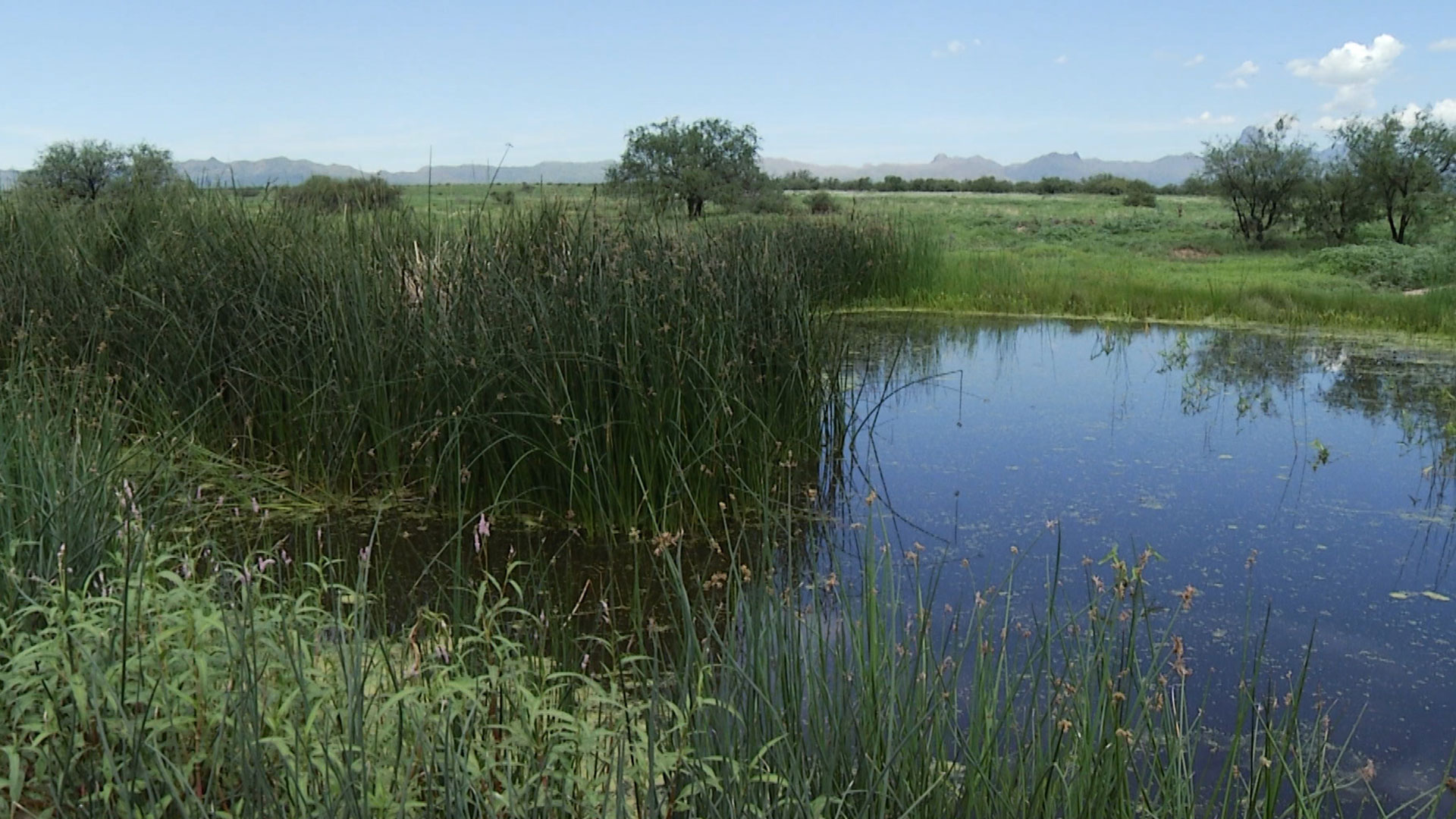 Buenos Aires NWR pond