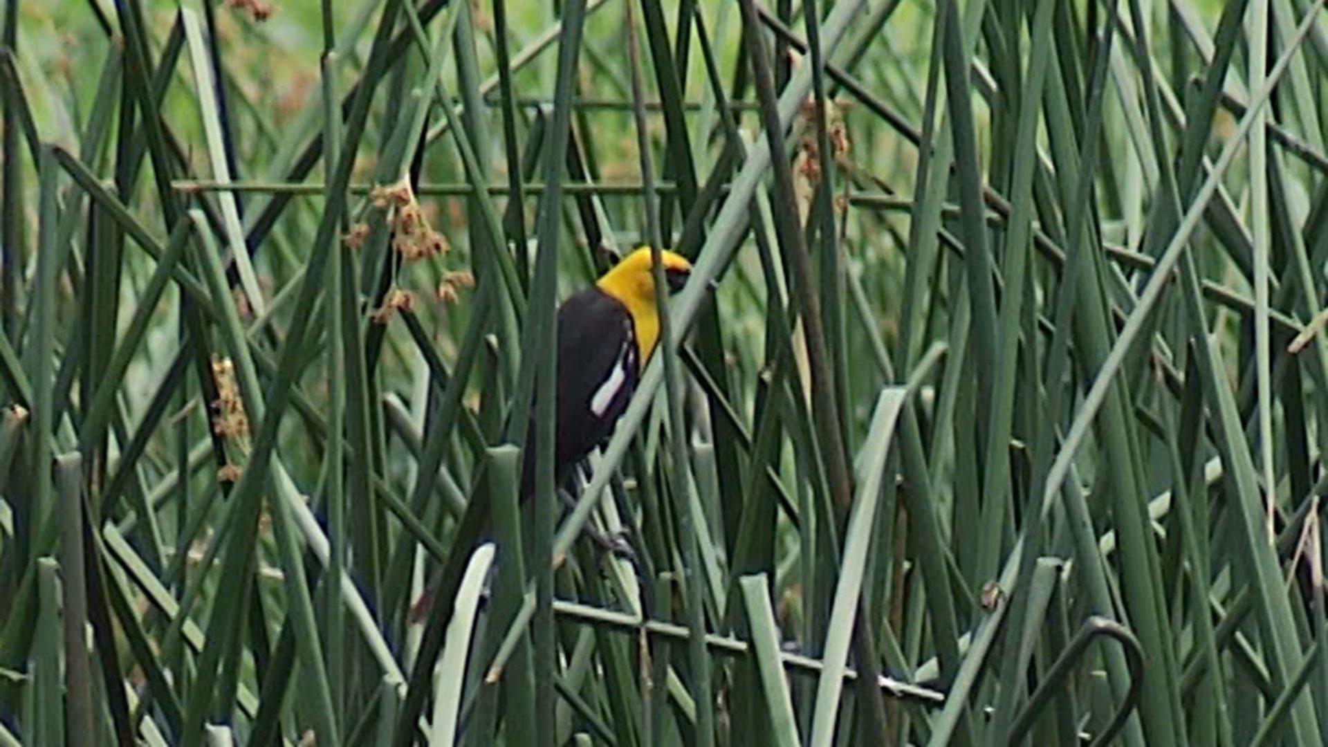 Buenos Aires NWR bird