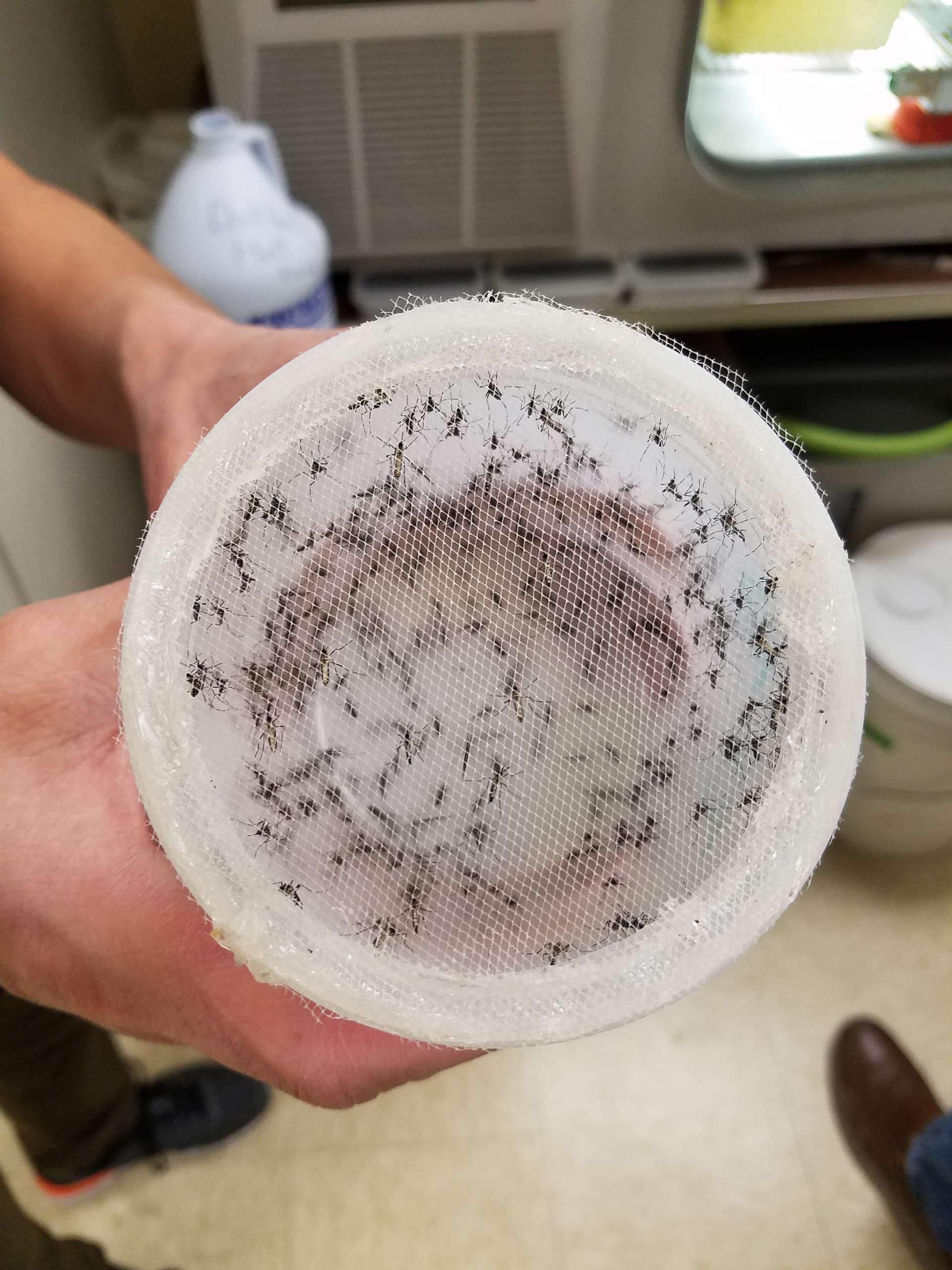 Mosquitoes-Canister