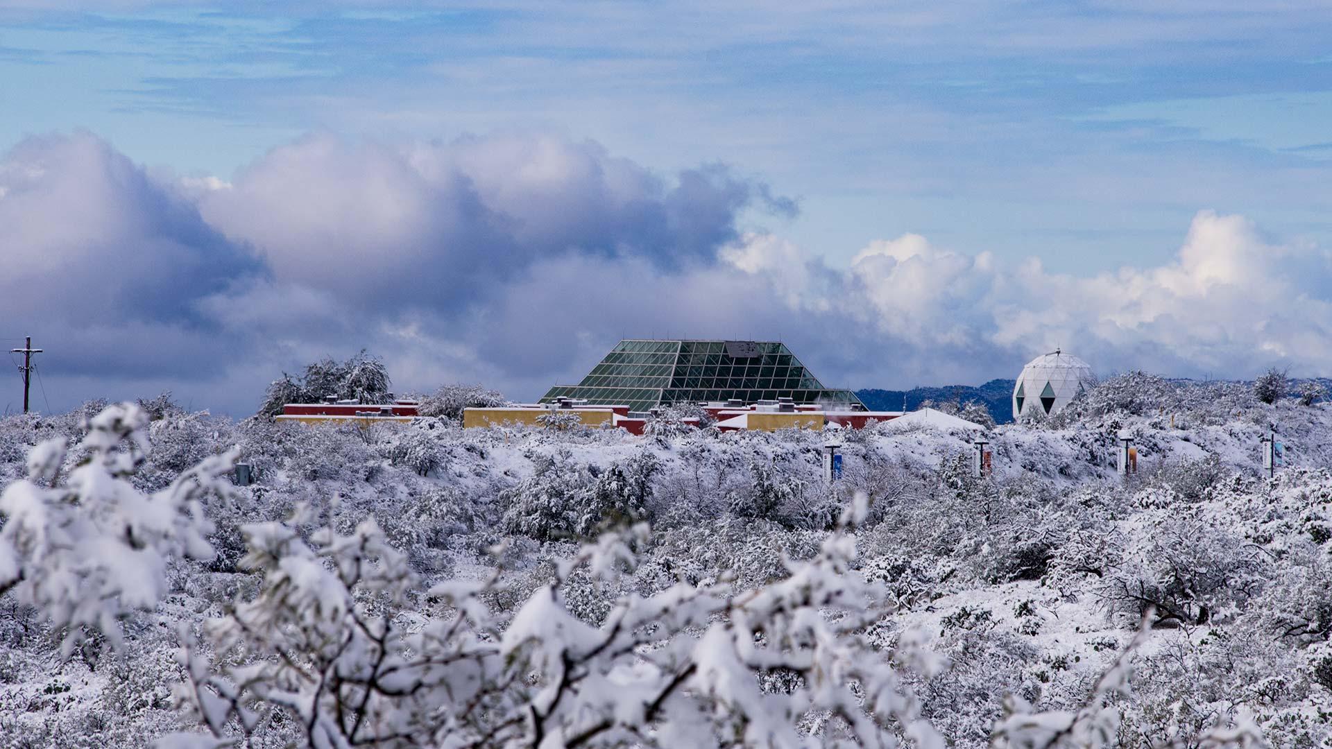 Snow biosphere