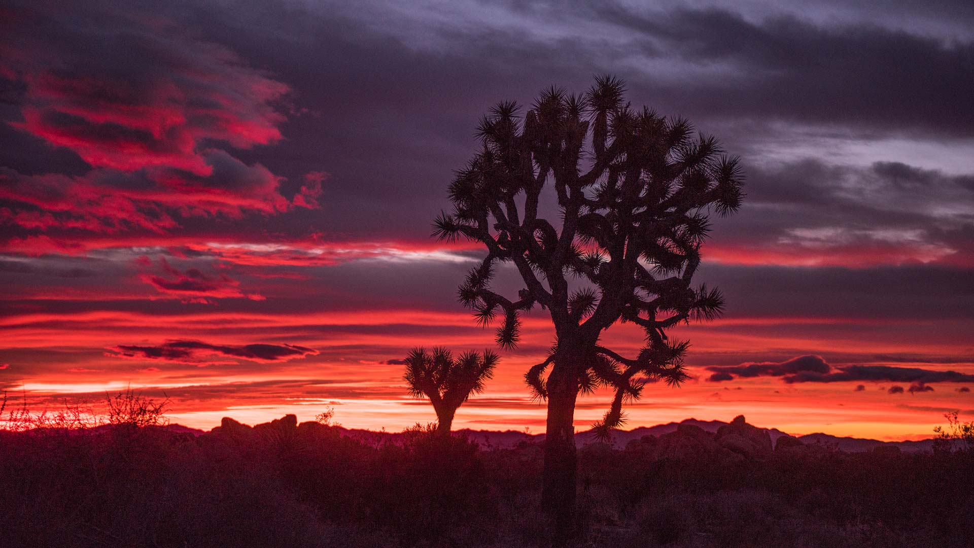 A sunset at Joshua Tree.