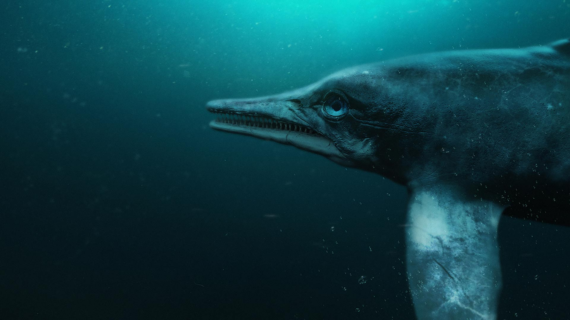 Computer-generated image of a brand new species of an Ichthyosaur discovered in Lyme Regis, UK.