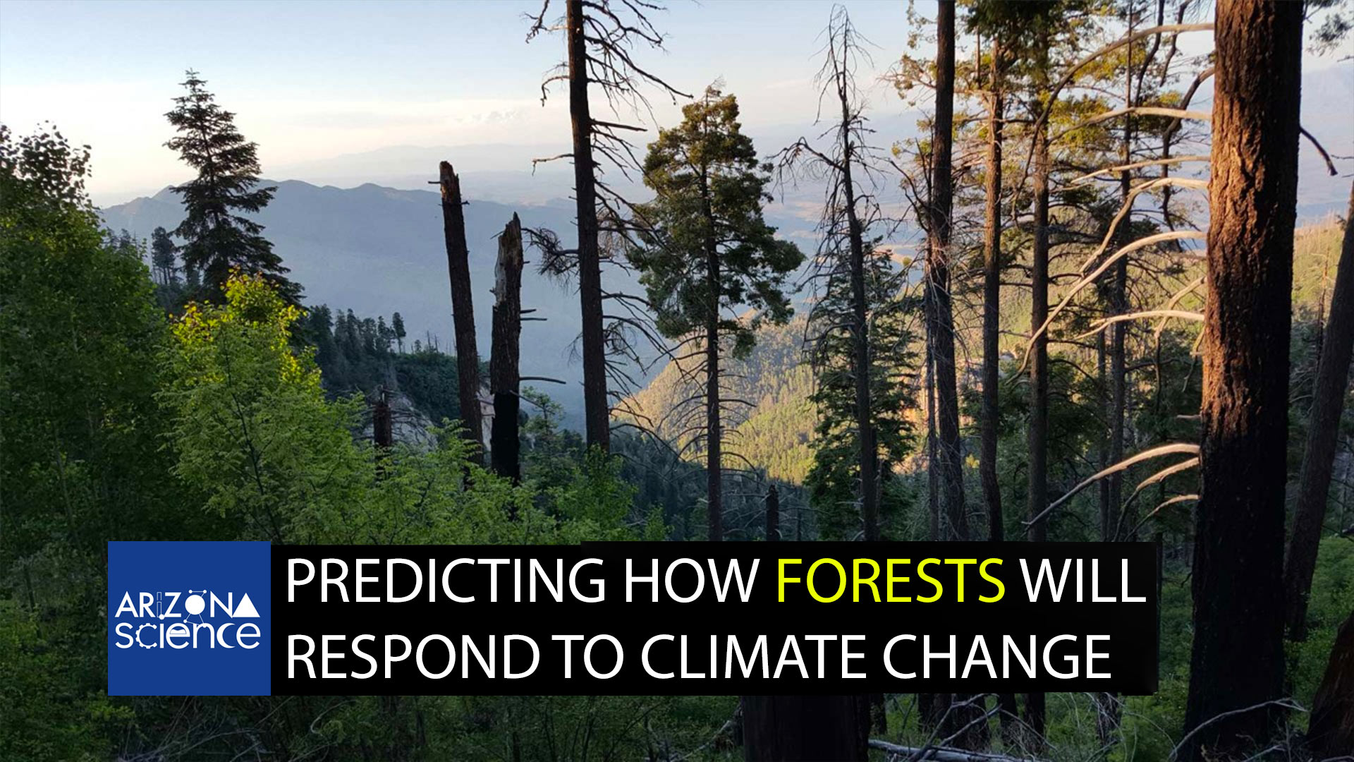 Episode 203: Predicting how forests will respond to climate change