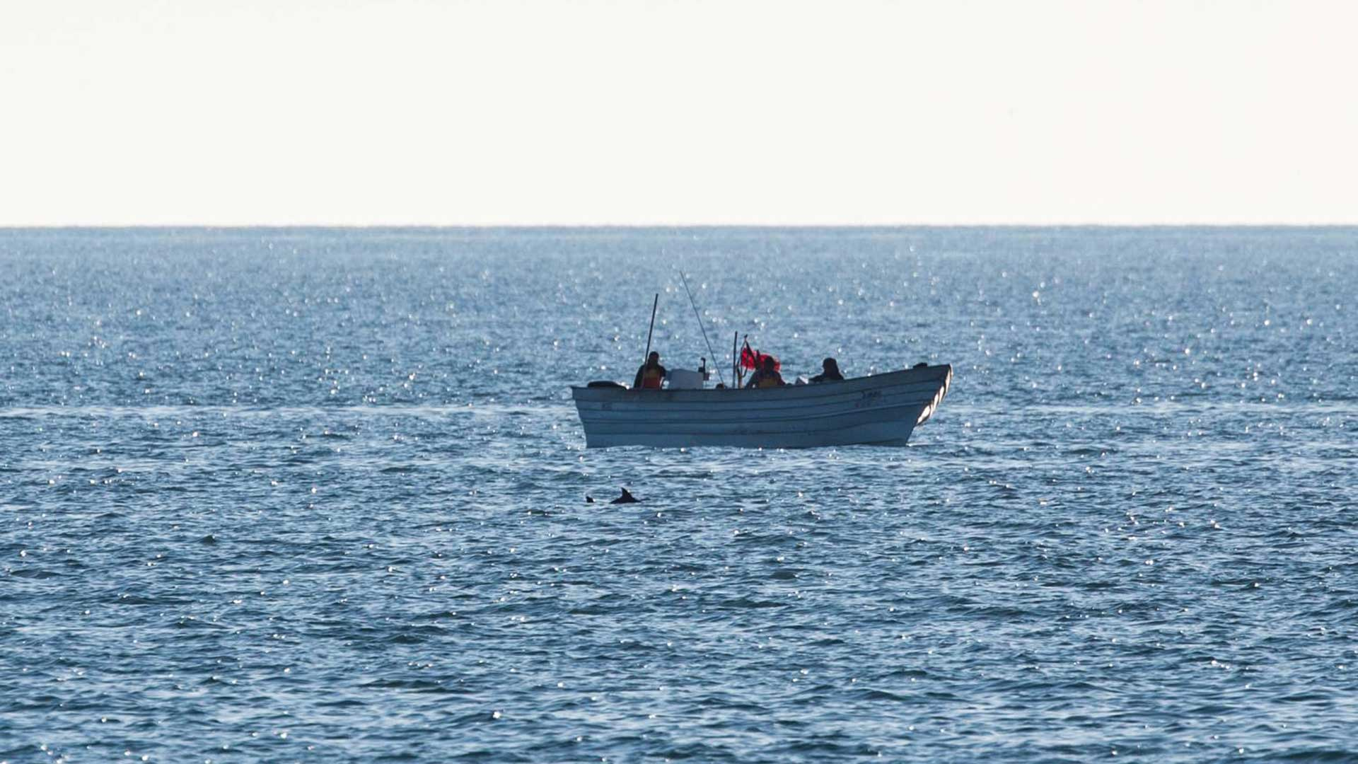 A vaquita was spotted just feet away from a fishing boat in a protected area in the uppermost part of the Sea of Cortez on Oct. 17, 2019.