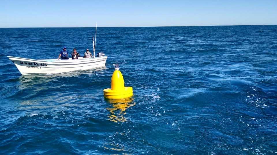 buoys vaquita