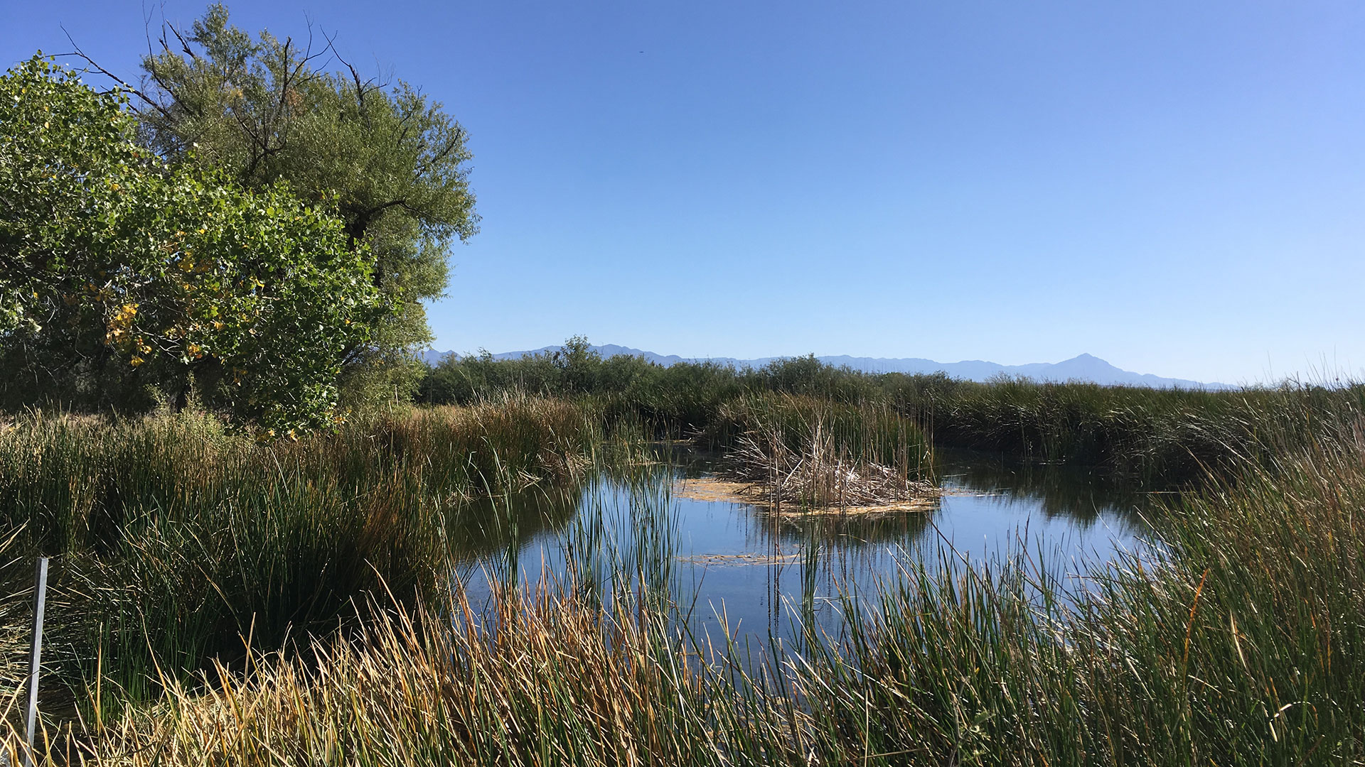 A spring-fed pond at the San Bernardino National Wildlife Refuge, a stone's throw from the U.S.-Mexico border. This property is managed by the U.S. Fish and Wildlife Service.