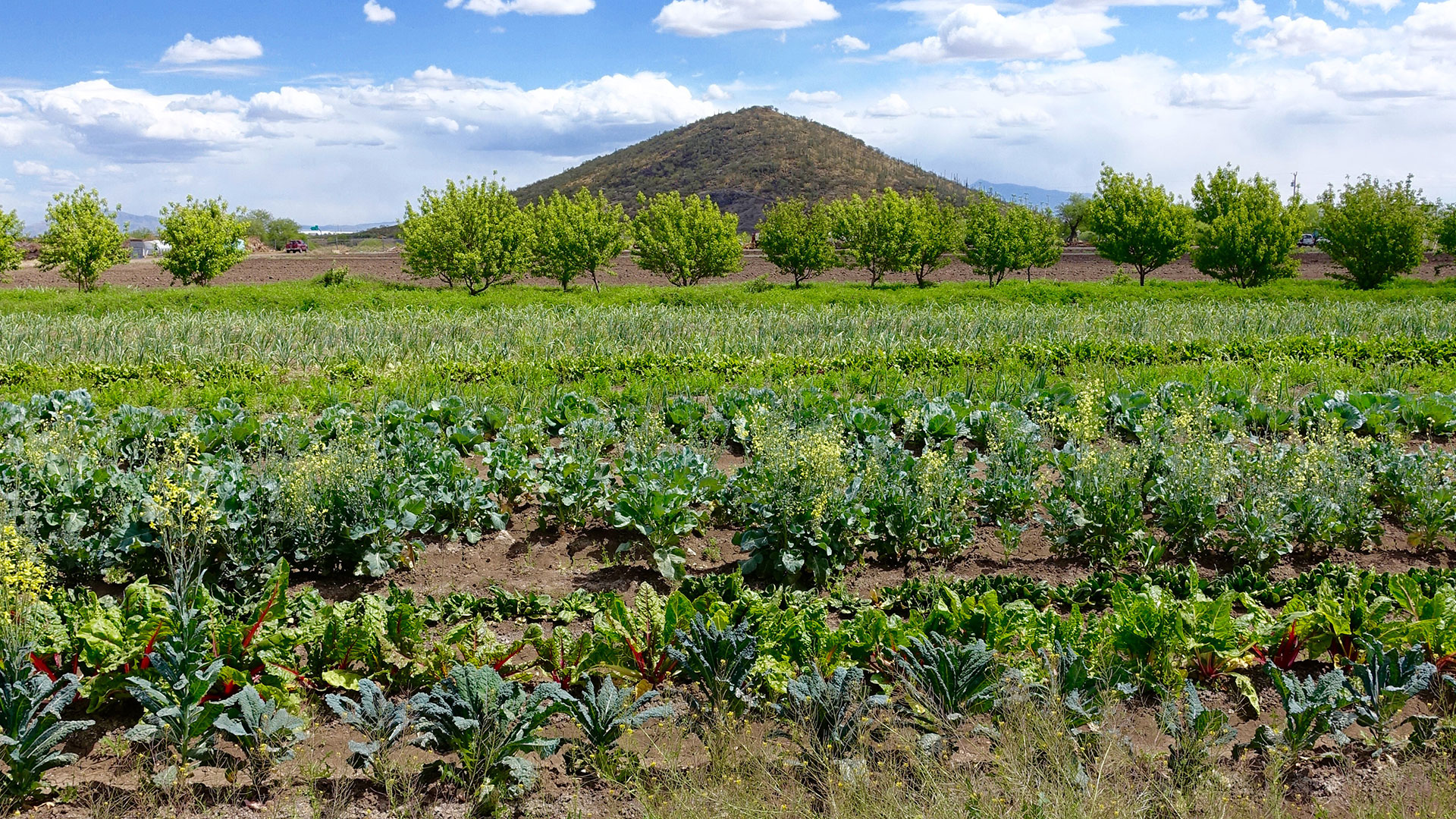 The San Xavier Cooperative Farm.