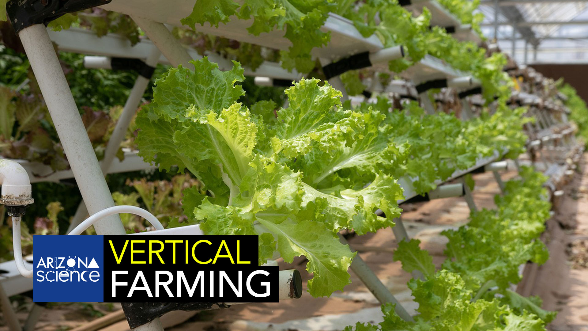 AZSCI 212 Vertical Farming