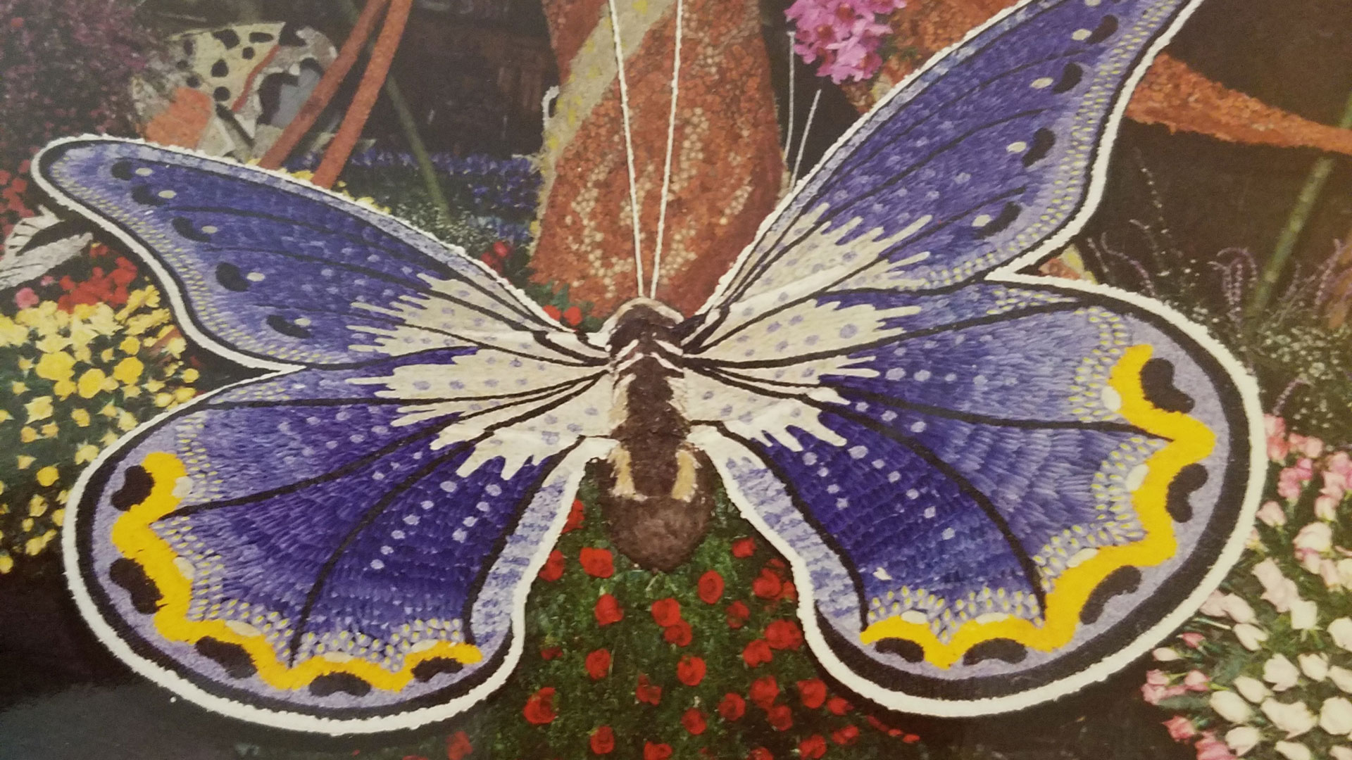 Rose Parade Butterfly