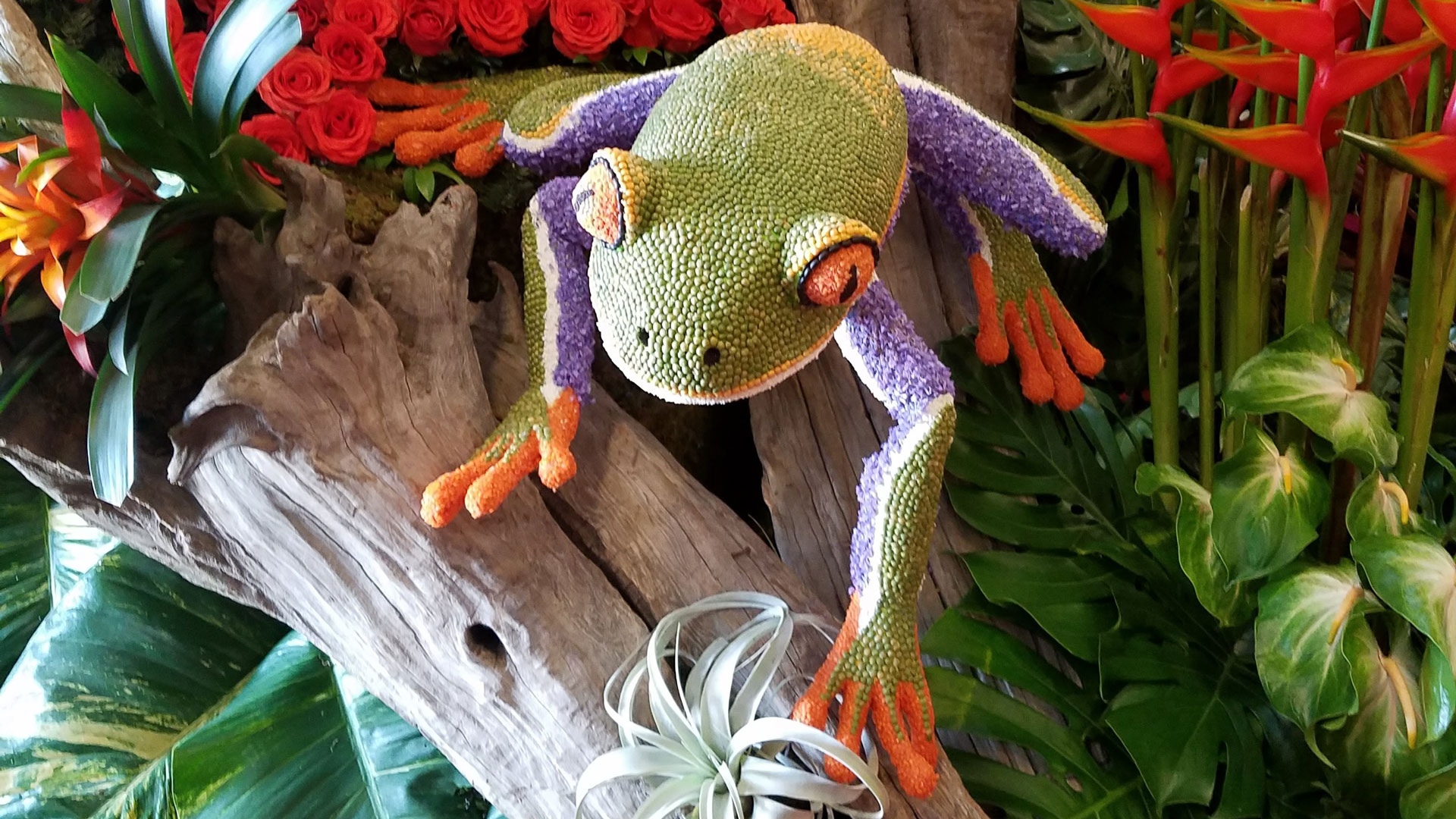 This frog for a Rose Parade float is made from thousands of peas, lentils and other natural products, as required by the rules.