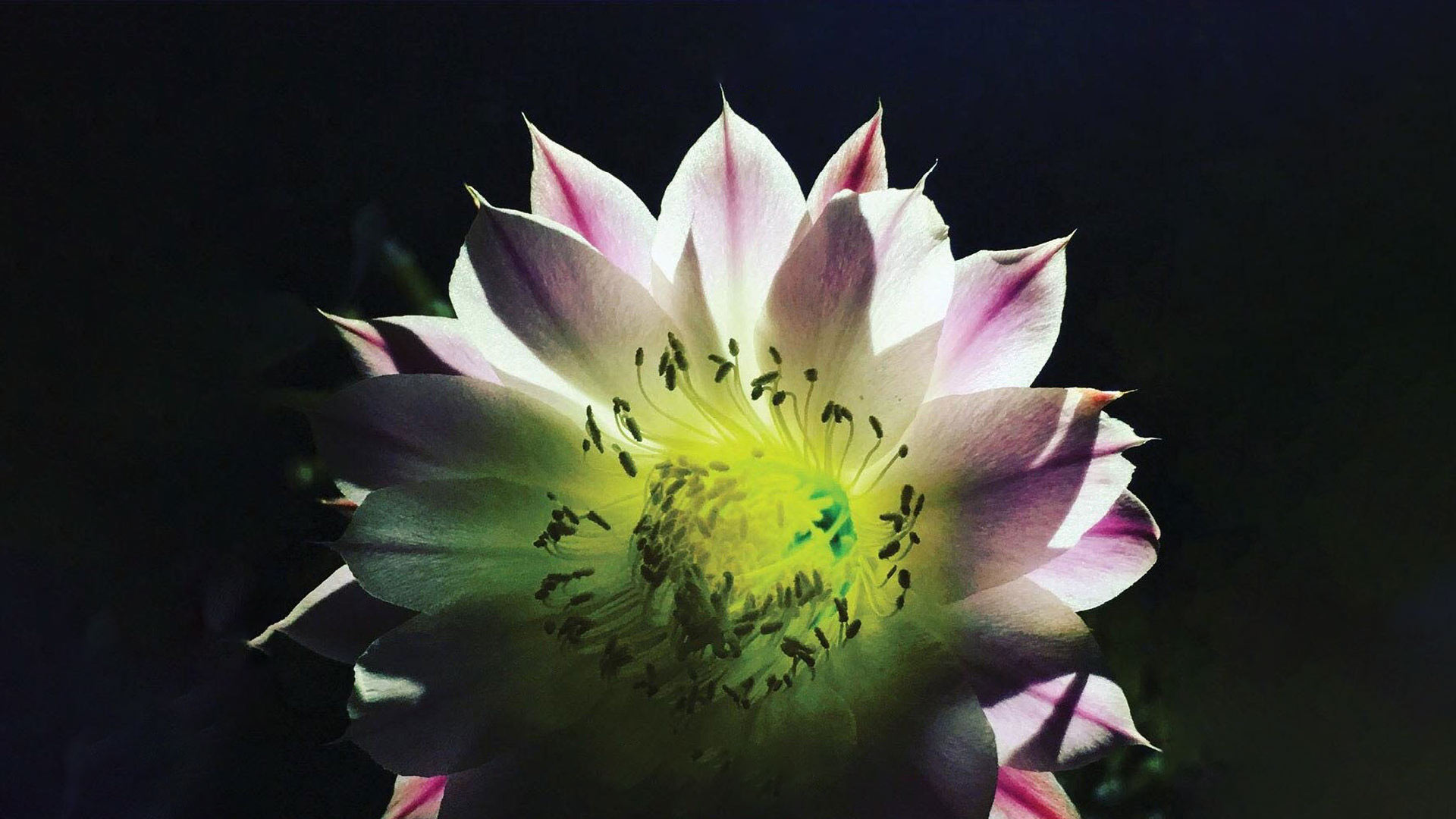 "The cover from La Cerca's 2018 album ""Night Bloom""."