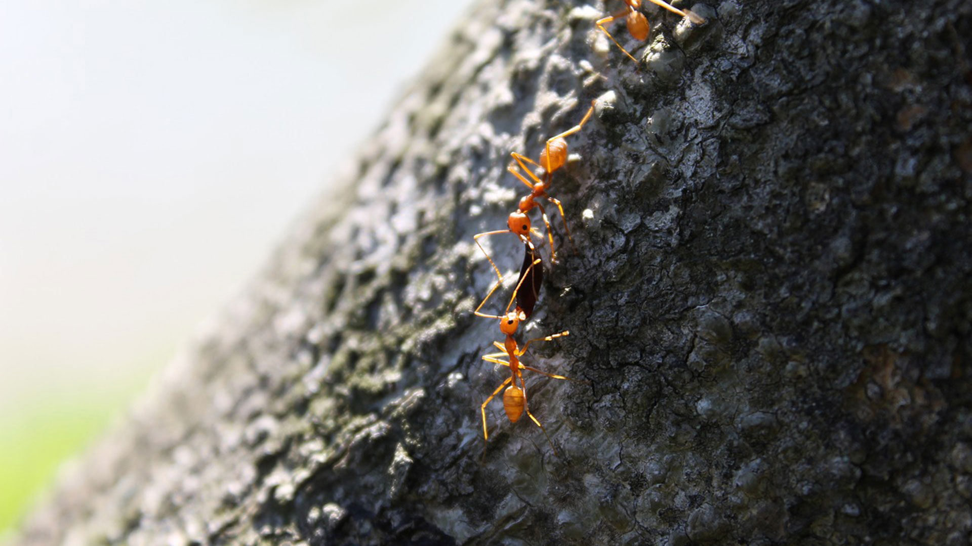 Researchers view the collective behavior of ants to search for links to human behavior.