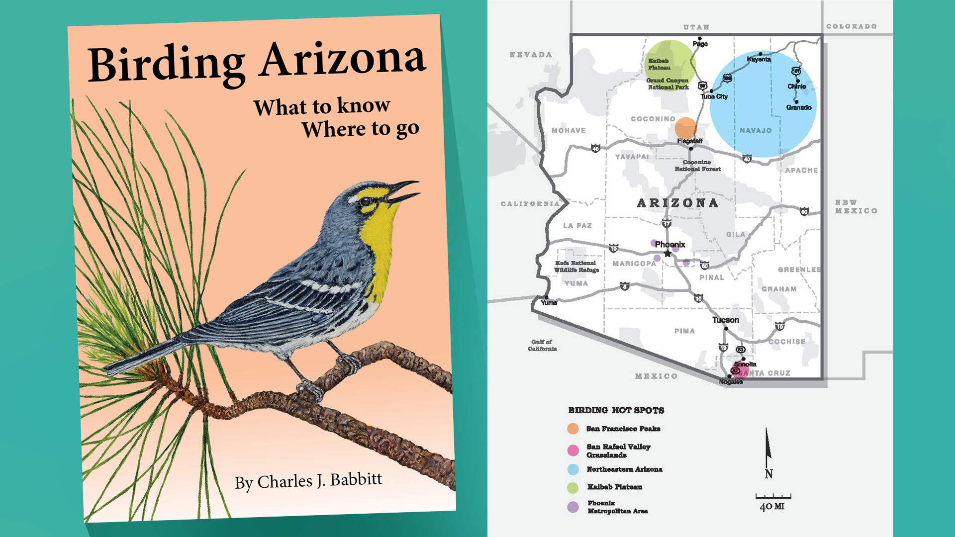 Birding Arizona cover