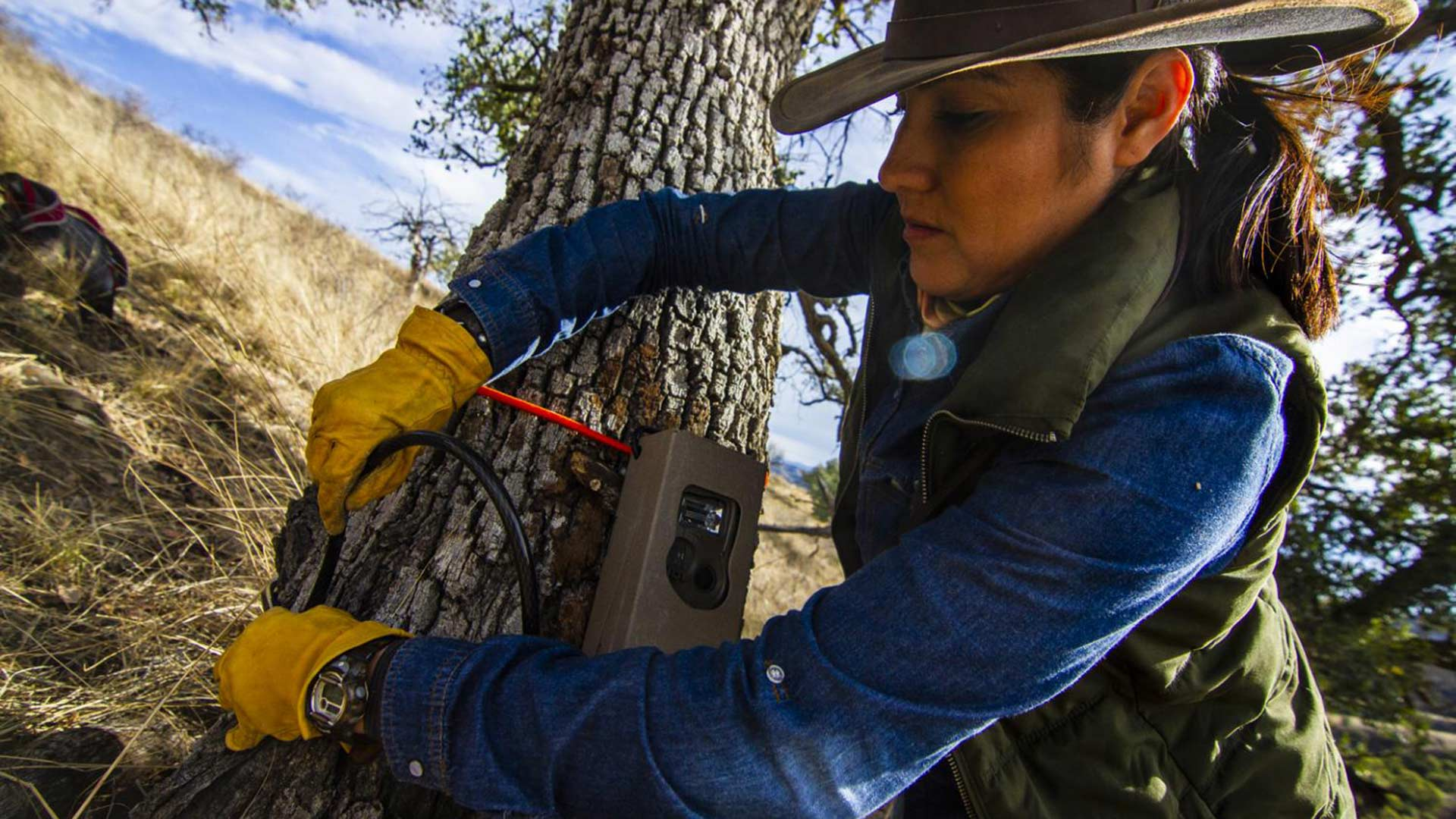 The Sonoran Ecology and Sustainable Development Commission's Shandira Romero finishes installing a game camera.