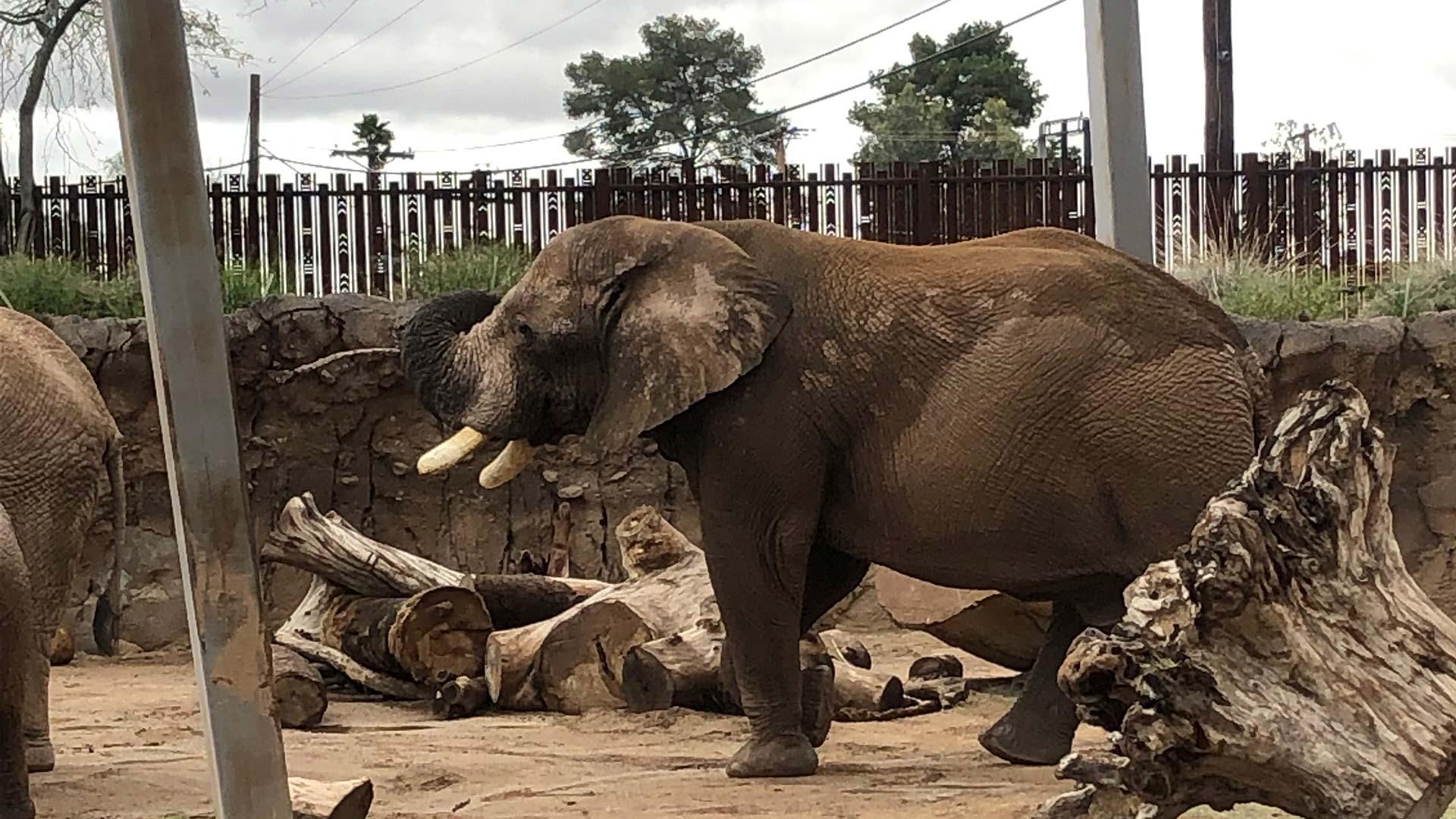 Semba Elephant 2