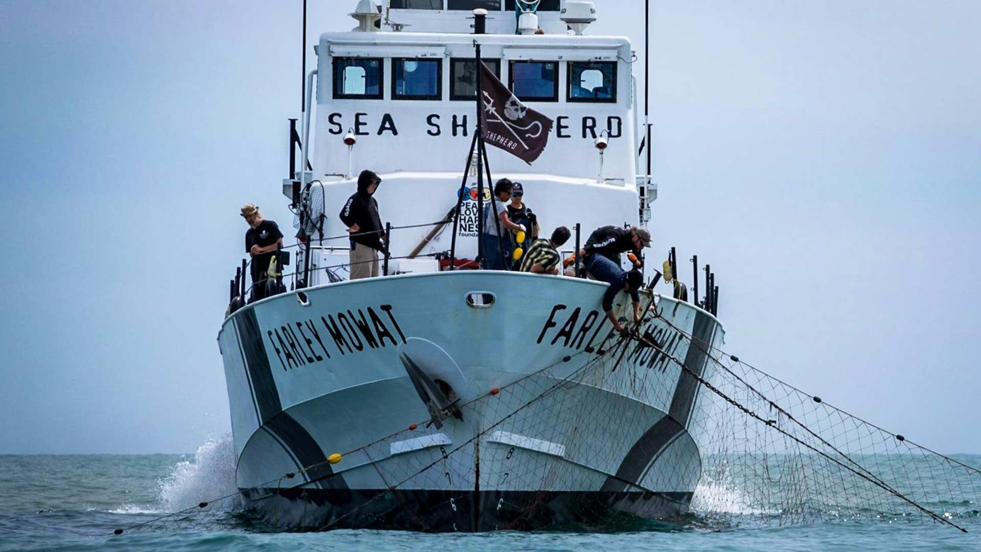 The Sea Shepherd pulls an illegal fishing net from the water in the vaquita refuge area. On March 12, 2019, the crew found a net with what they believe was a dead vaquita marina porpoise entangled in it.