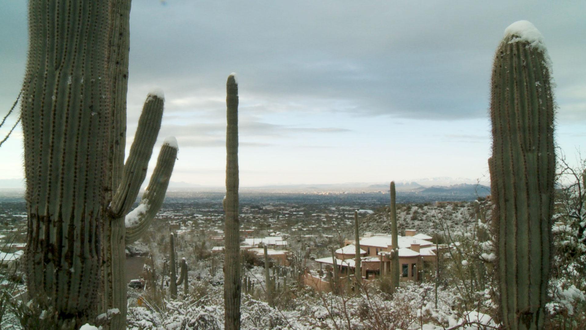 Tucson snowfall on the Finger Rock Trailhead, 2015.