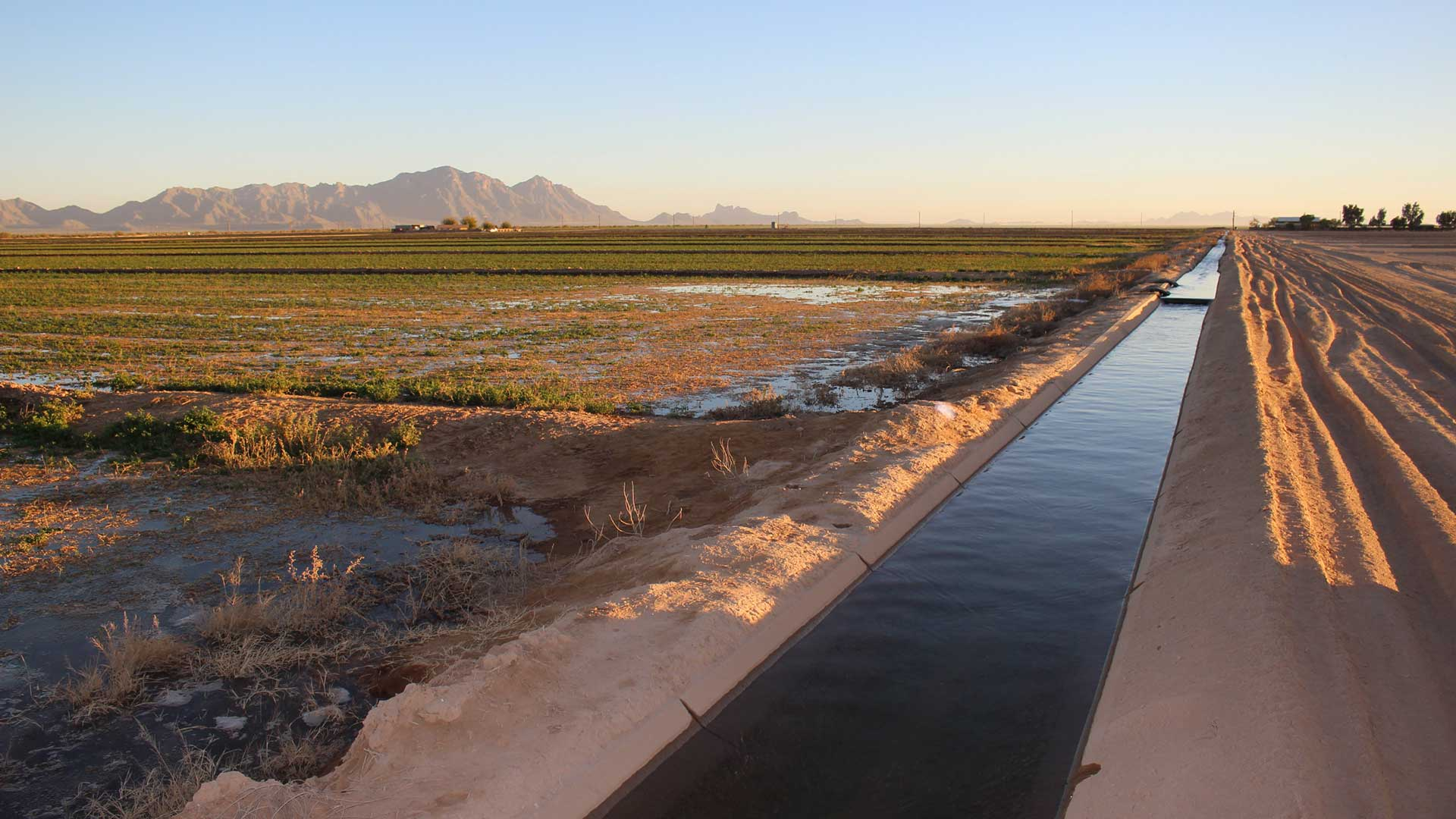Water from the Colorado River flows through an irrigation canal at an alfalfa farm near Eloy, Arizona.
