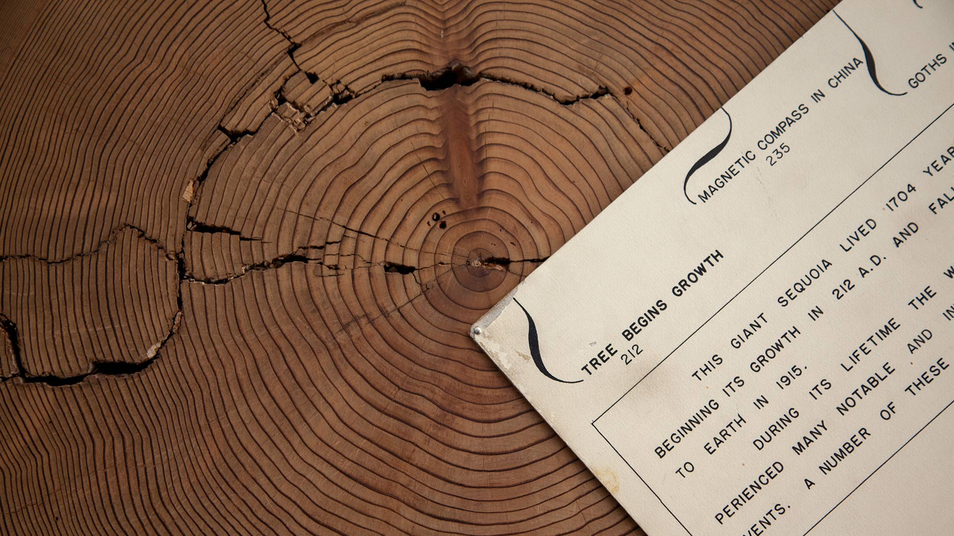 Bryant Bannister Tree-Ring Building display