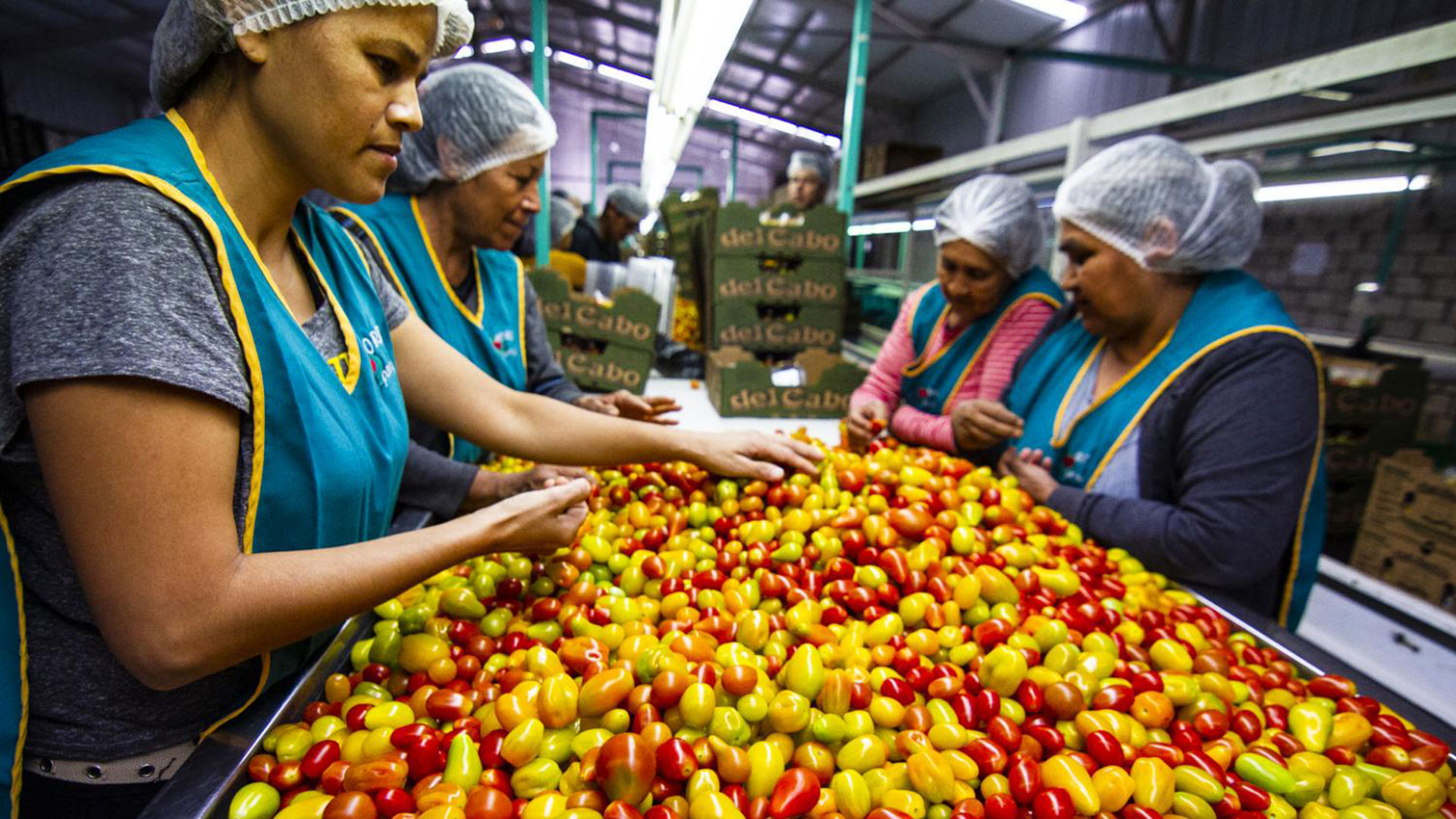 Workers sort through tomatoes at a packing plant in southern Sonora, Mexico.
