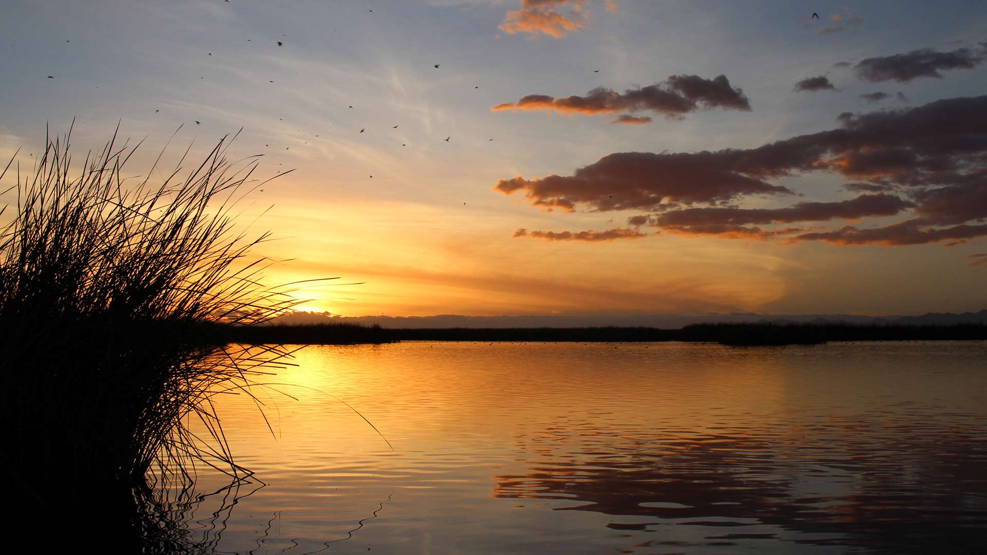 Sunset at the Ciénega de Santa Clara in northern Mexico. The wetland is fed by salty runoff from American farms near Yuma, Arizona.