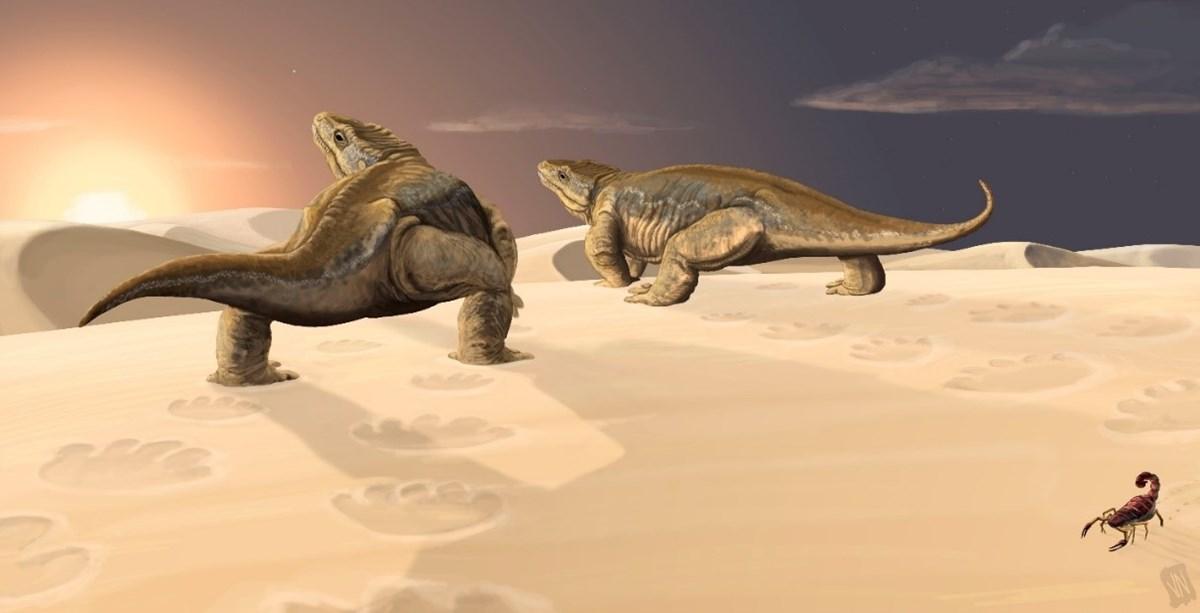 tetrapod vl