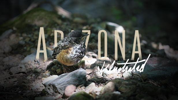 Arizona Illustrated Episode 533