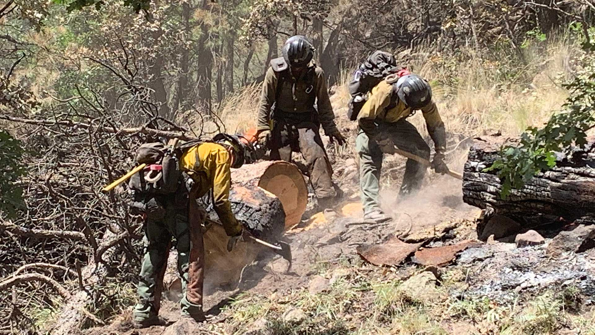 Photo posted to a government incident tracking website of firefighting crews working on the containment line of the Museum Fire, July 28, 2019.