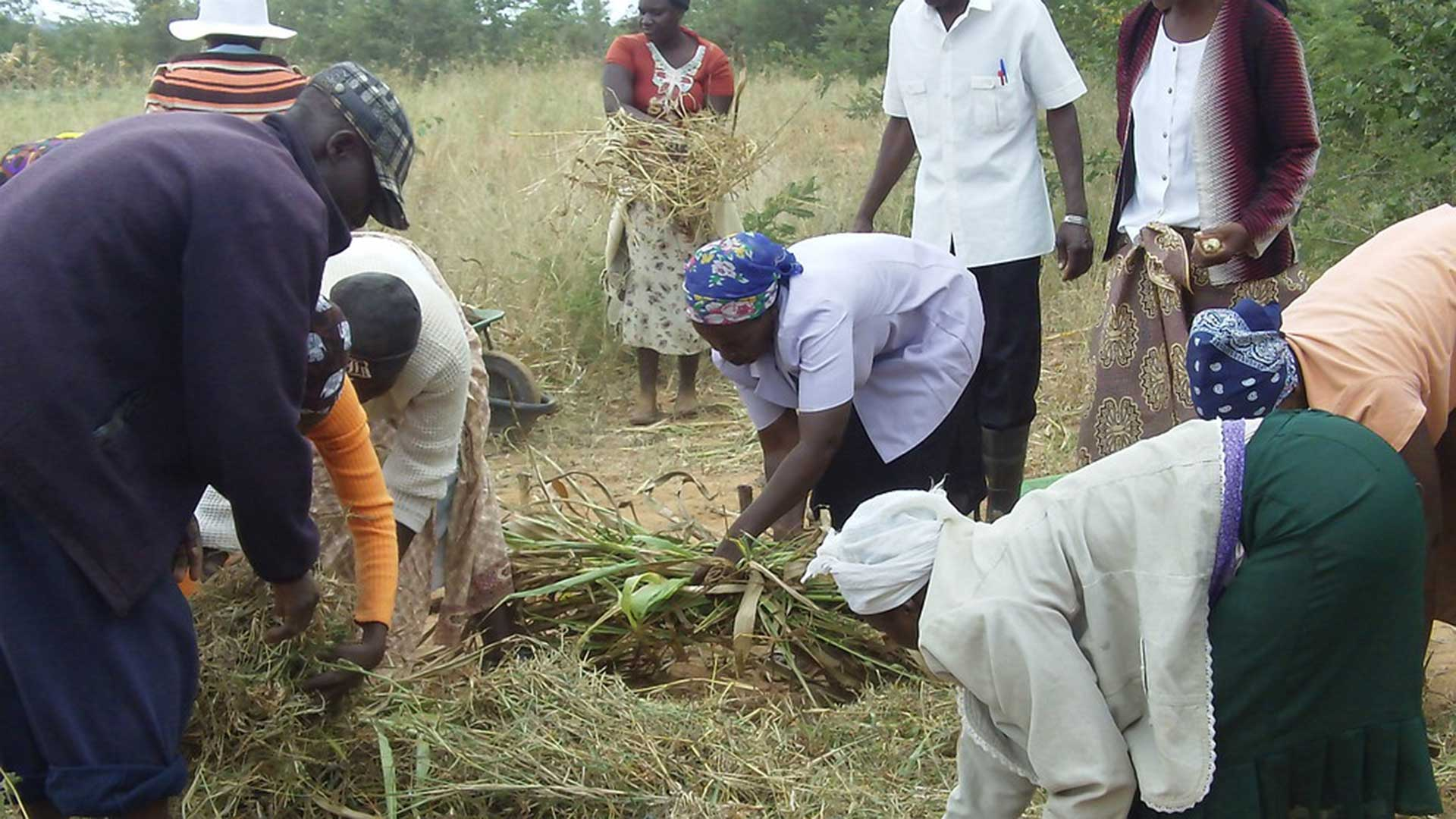 Conservation agriculture in Zimbabwe.