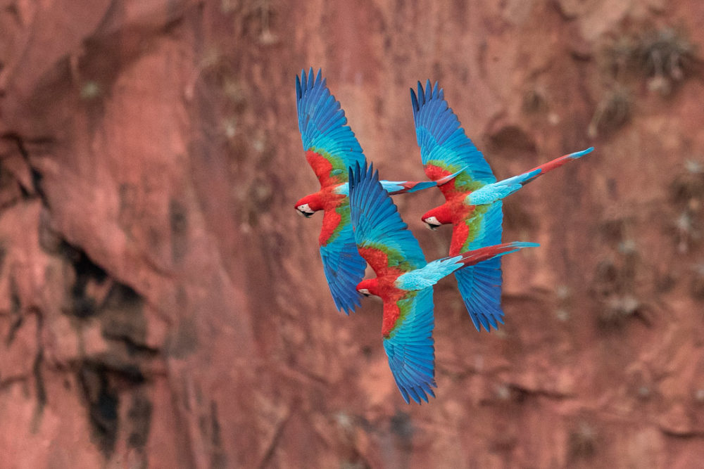 npr news animal photog 6 macaws