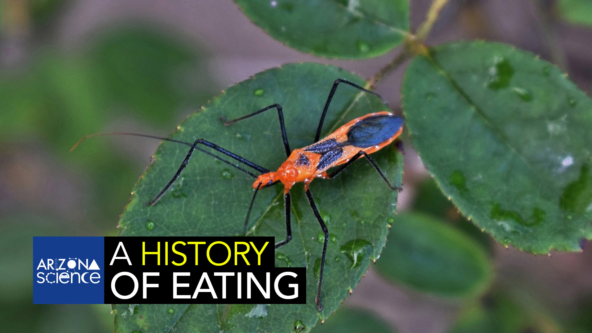 AZSCI 200 History of Eating