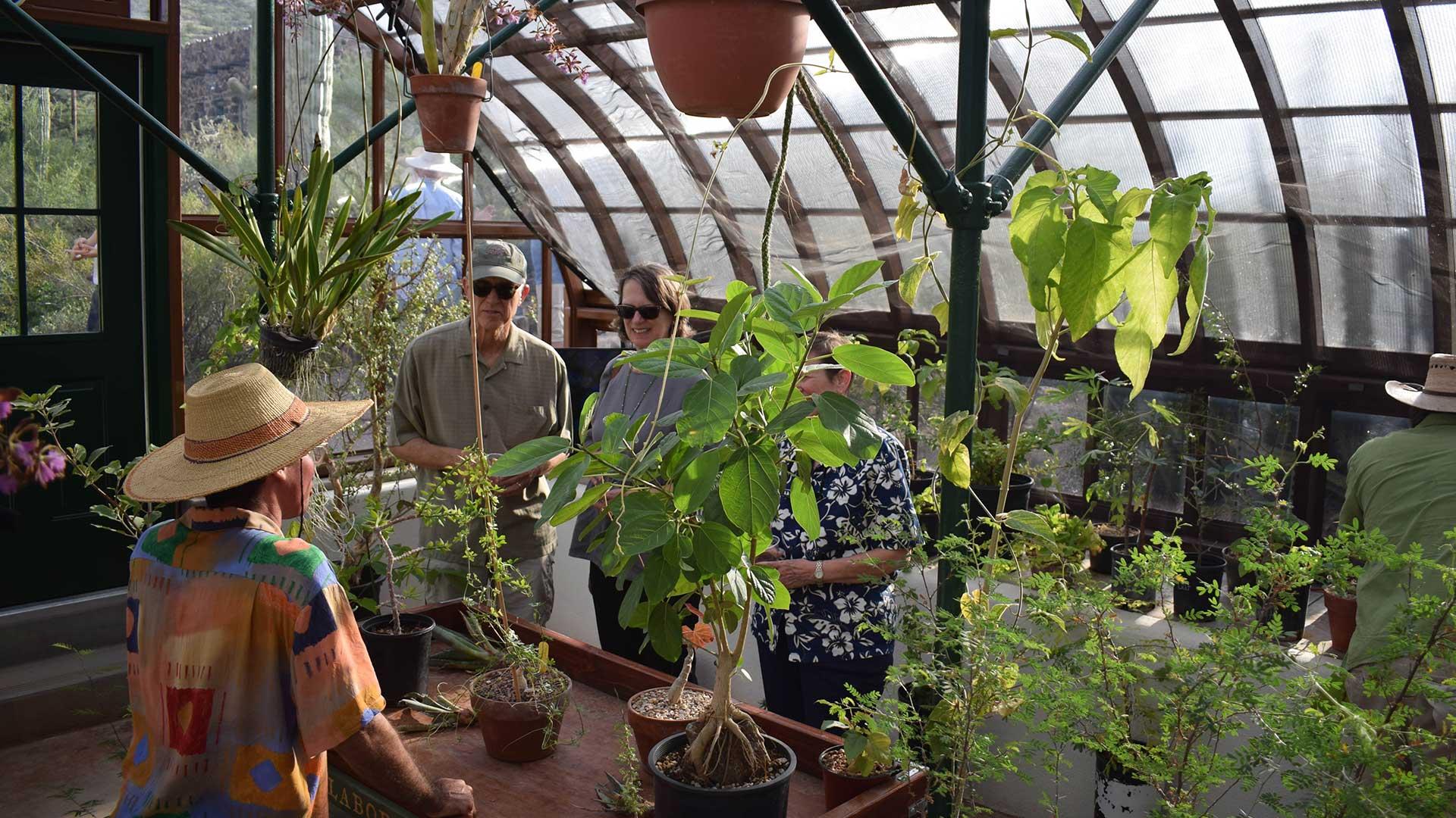 Tumamoc greenhouse 4