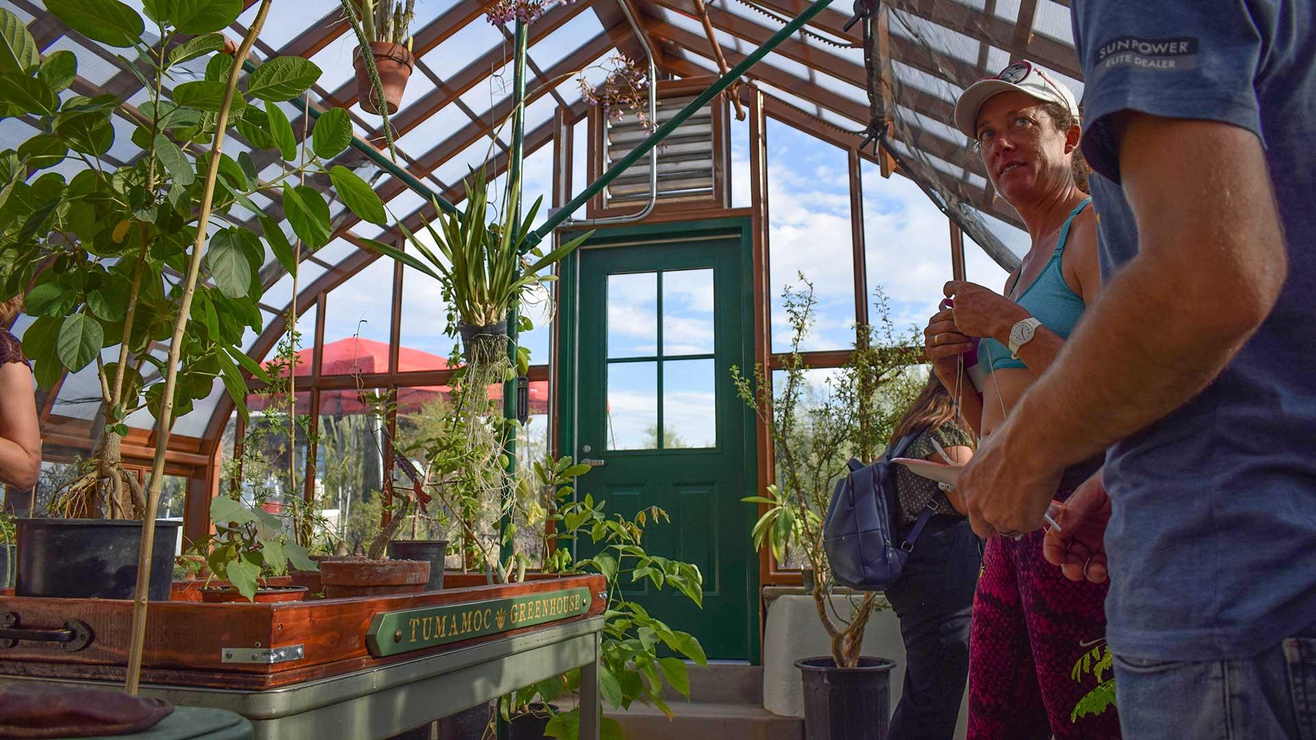 Tumamoc greenhouse 1