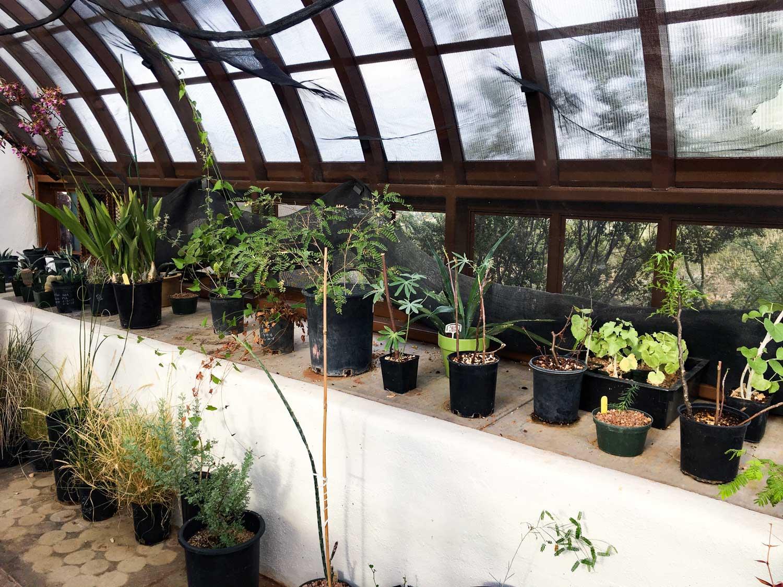 Tumamoc greenhouse 6