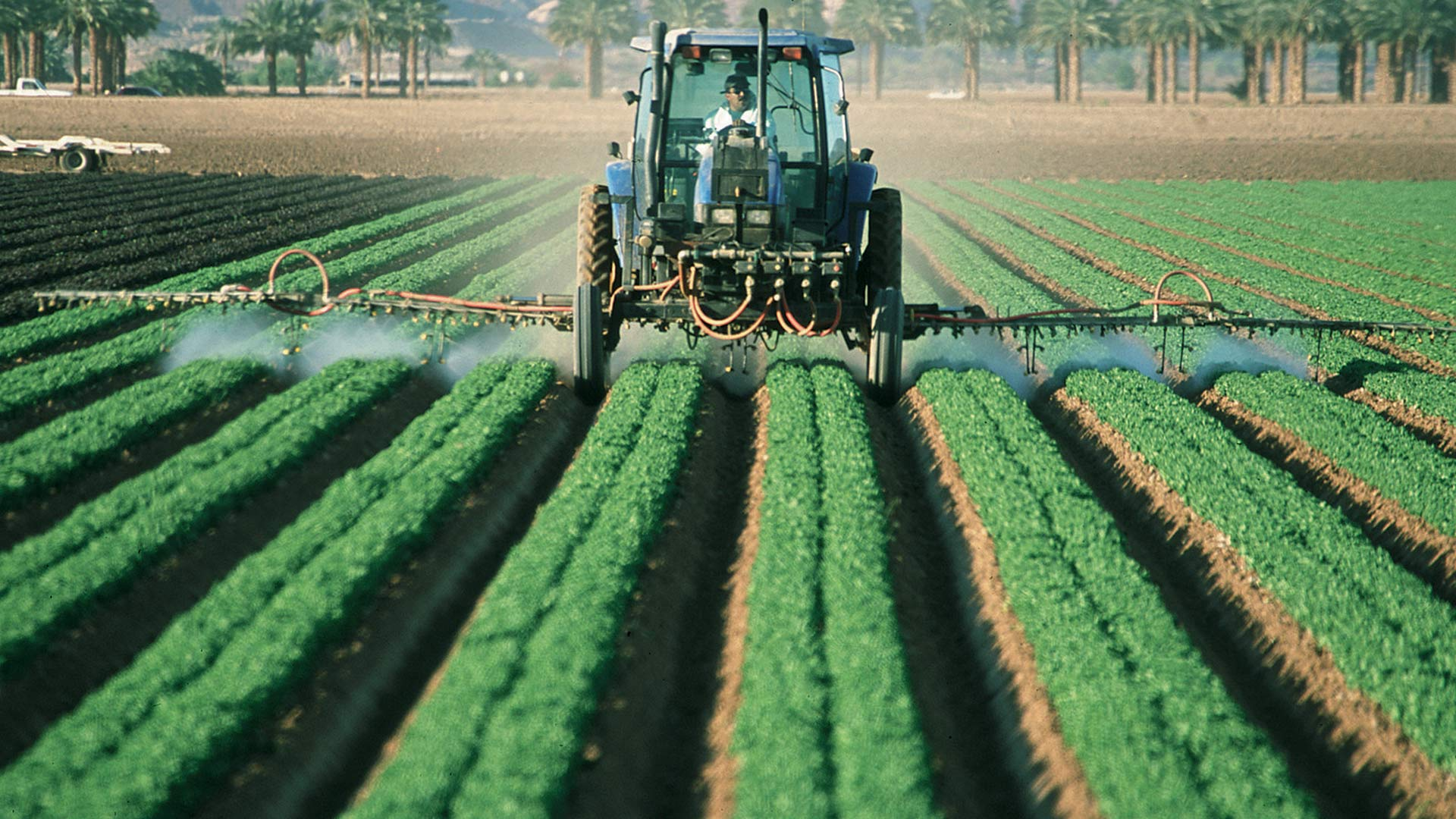 Romaine lettuce field in Arizona. Lettuce is the state's top cash crop, according to the UA Cooperative Extension.
