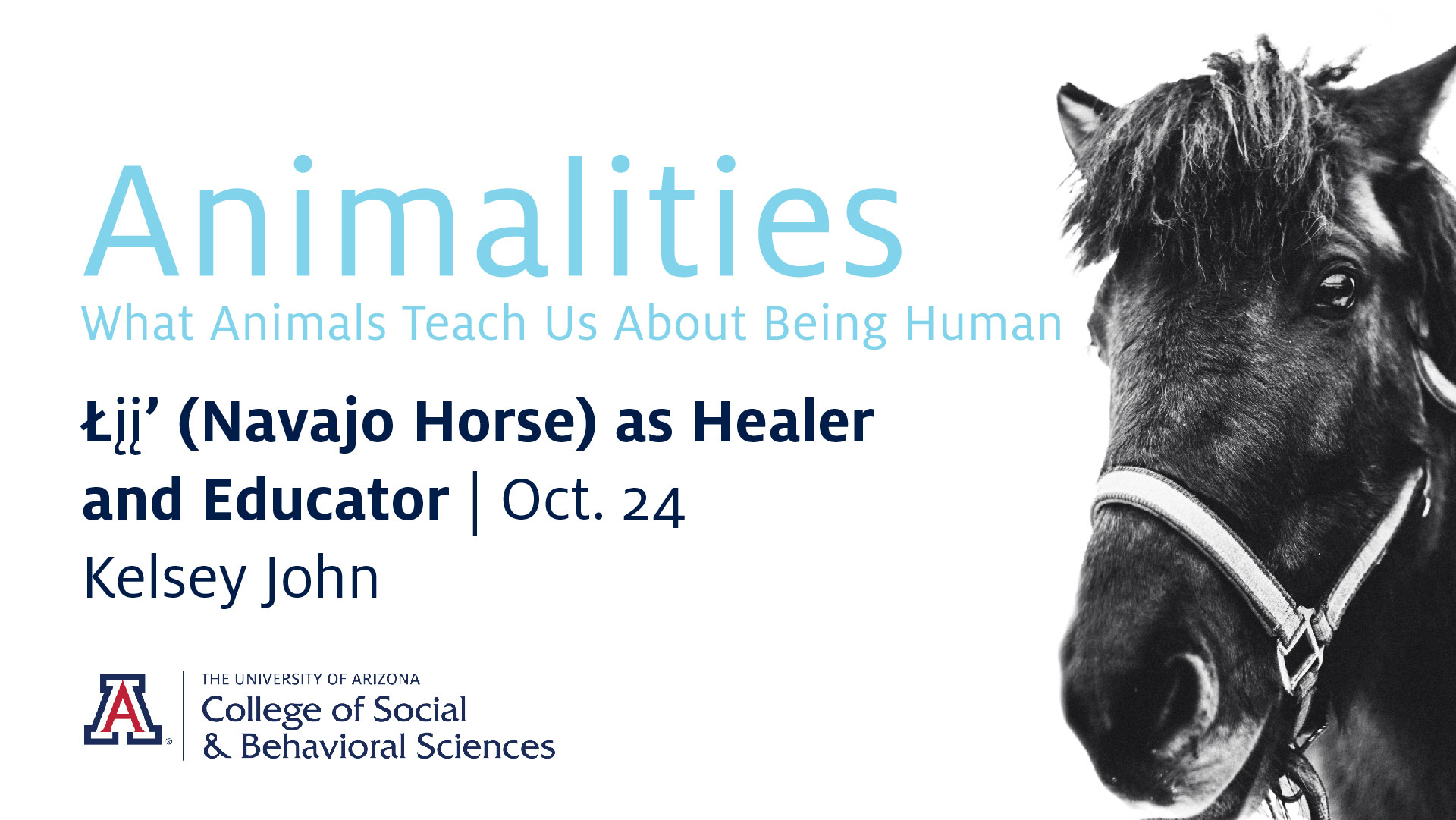 Navajo Horse as Healer and Educator