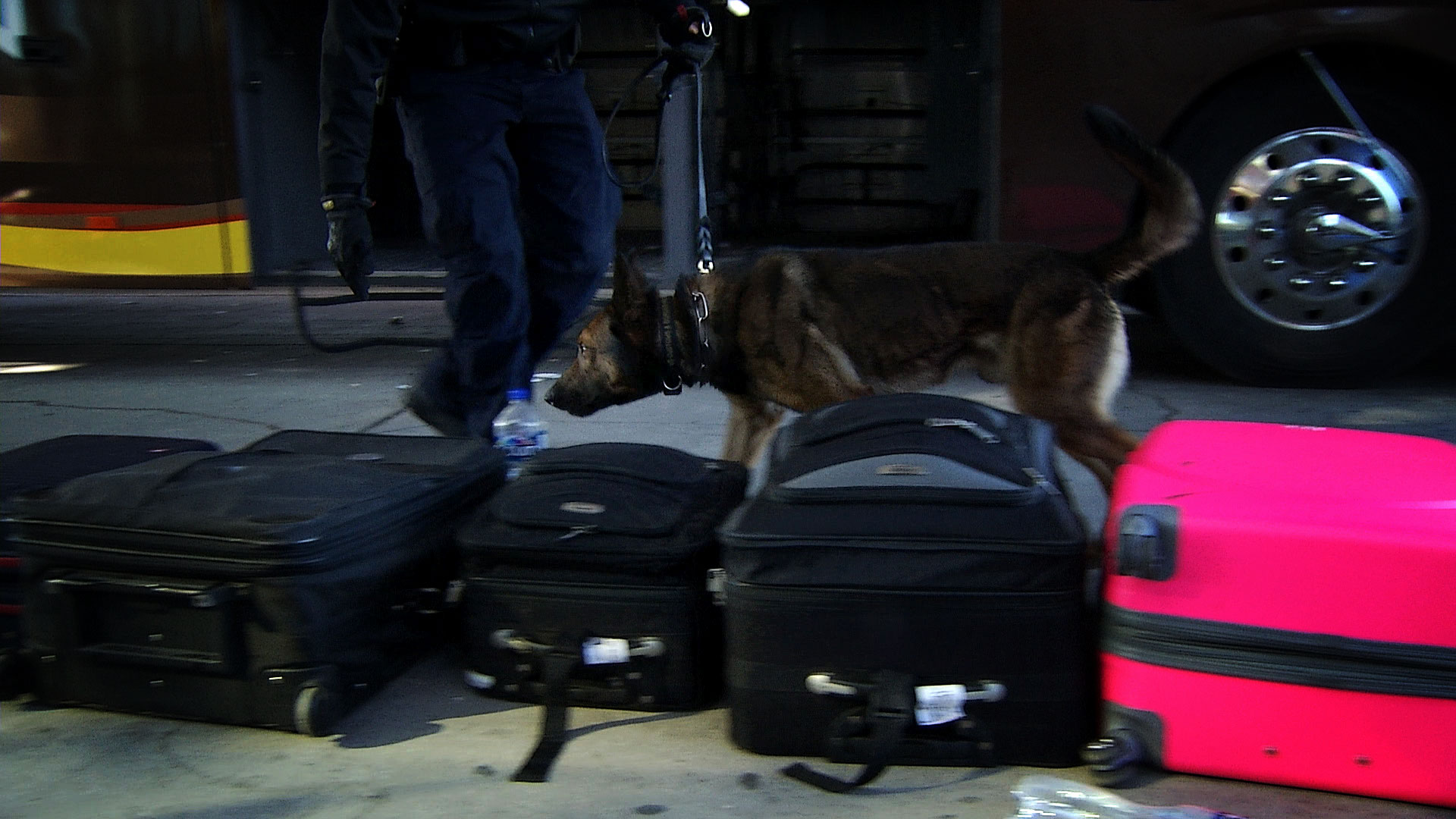 A Customs and Border Protection drug detection K-9 sniffs luggage at the Mariposa Port of Entry in Nogales.
