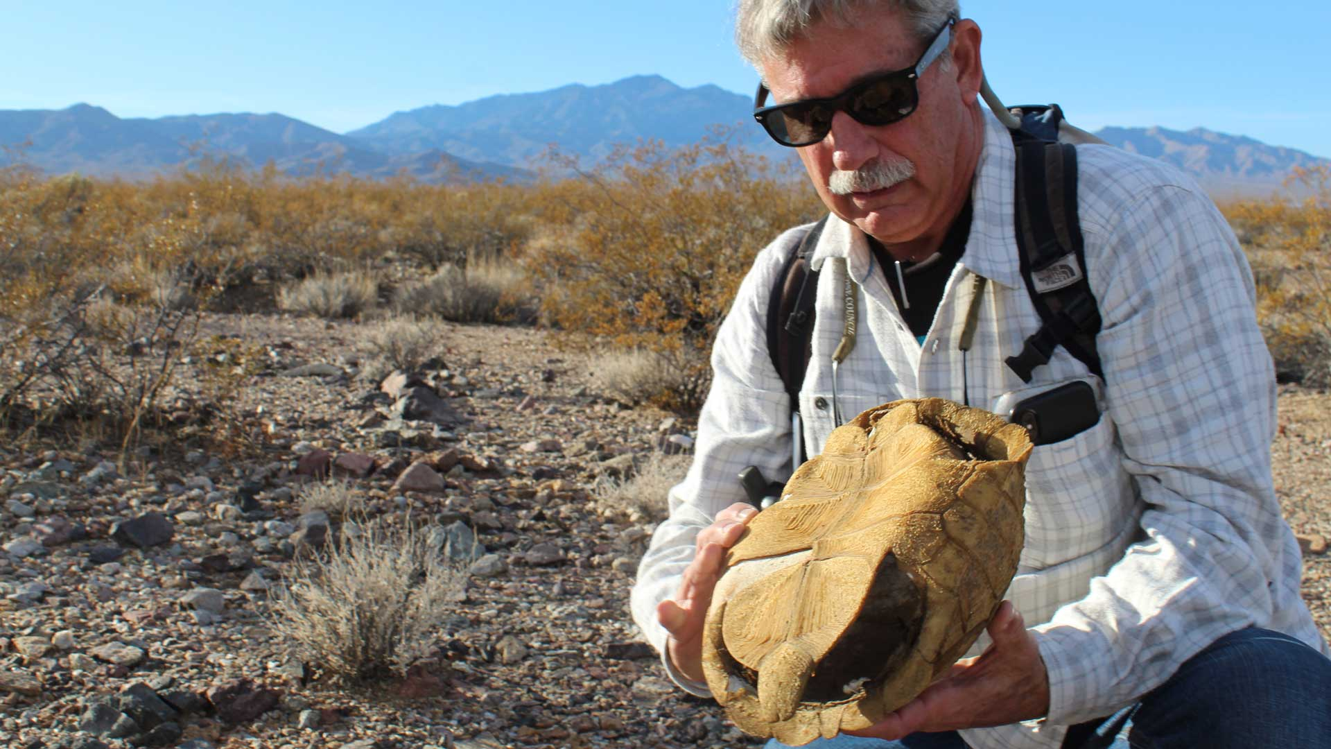 U.S. Geological Survey ecologist Todd Esque holds a tortoise shell in the Mojave Desert, south of Las Vegas.