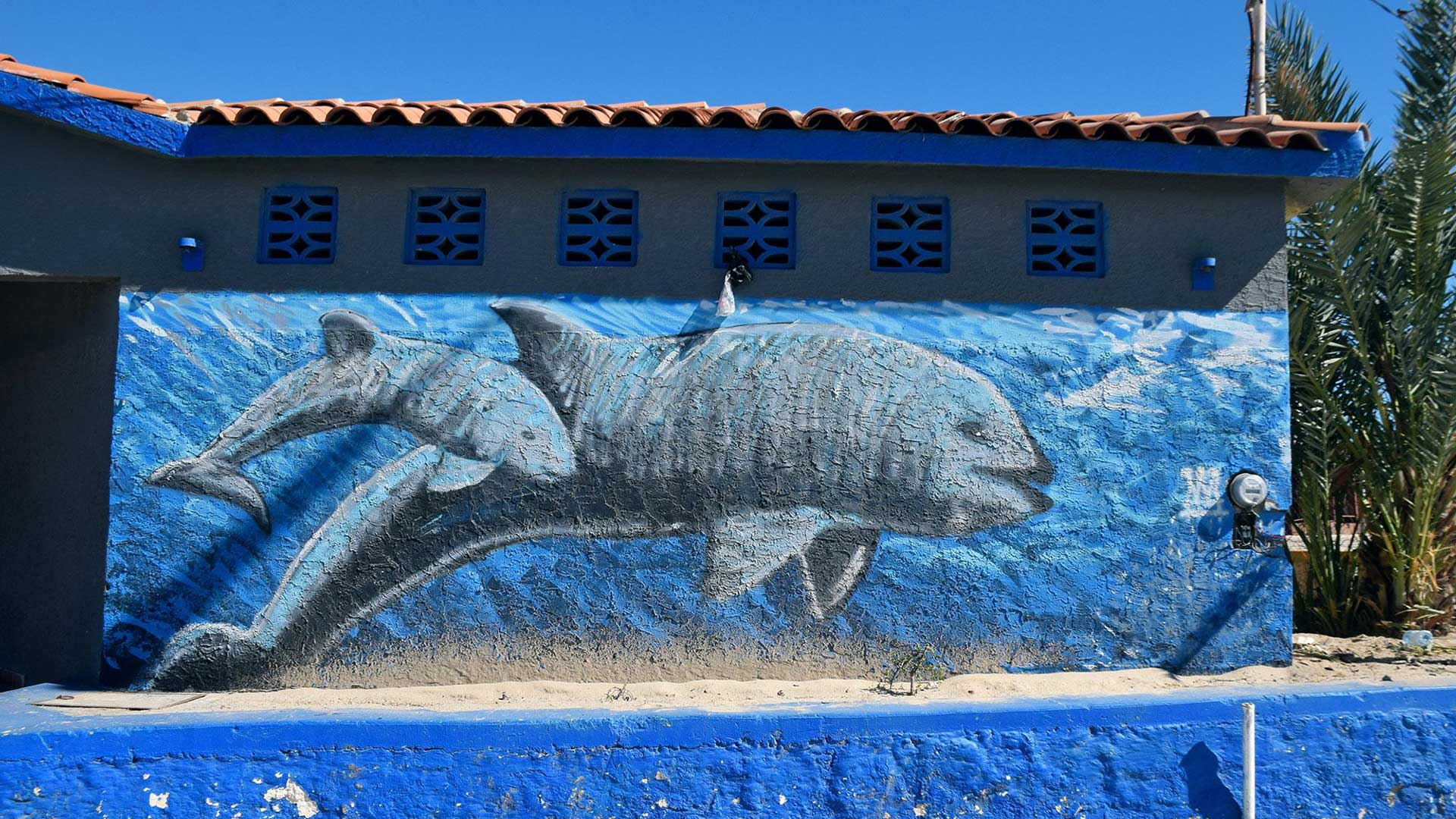 A mural of a vaquita mother and calf near the boardwalk in San Felipe, Baja California.