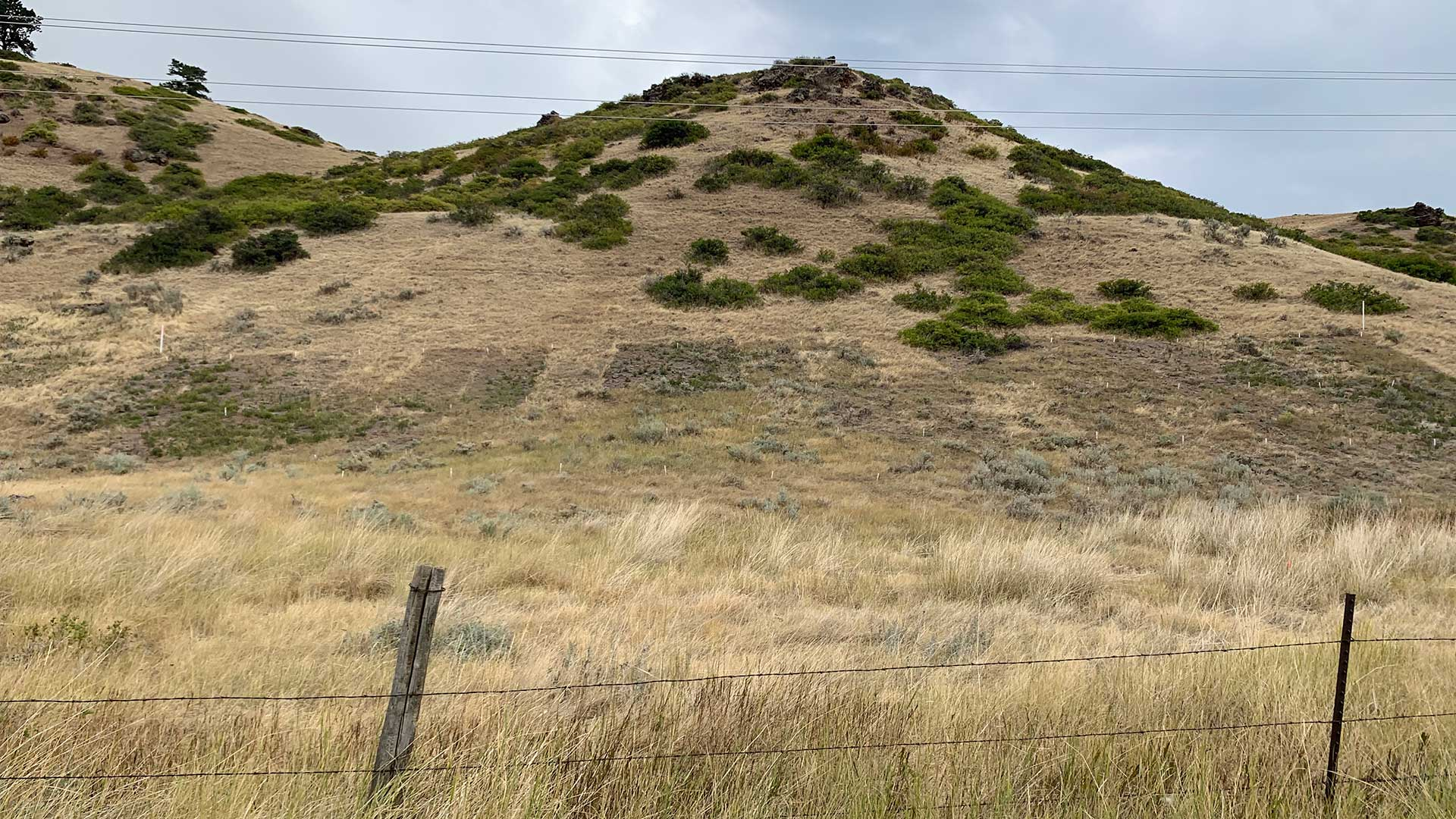 Eighteen plots are laid out on the hillside on Brian Mealor's property in Sheridan County, Wyo. Mealor is studying how differing amounts of herbicide sprayed at different times of year can be used to manage invasive species.