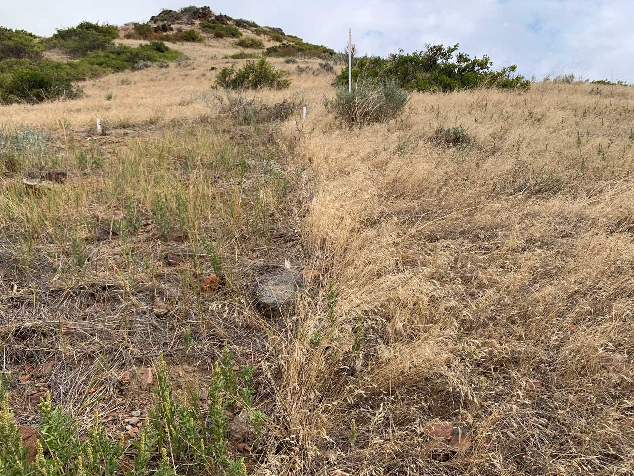 grasslands4