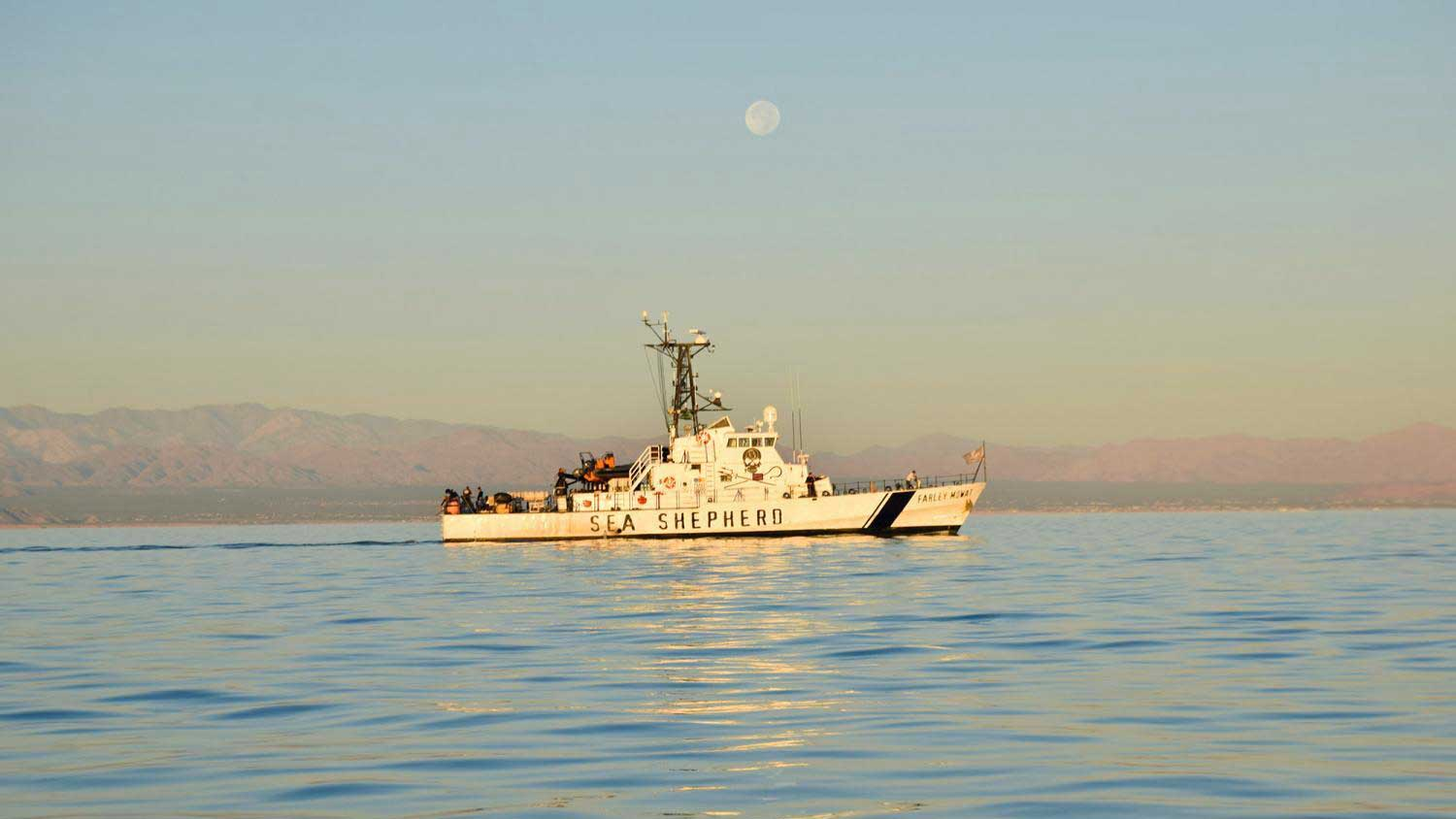 Sea Shepherd Conservation Society's patrol ship M/V Farley Mowat in the Sea of Cortez in September 2019.