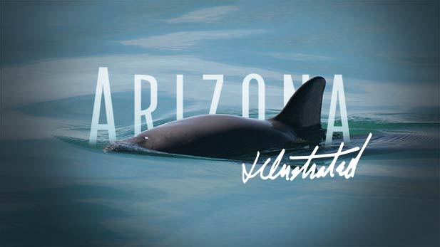La Vaquita - An Arizona Illustrated Special