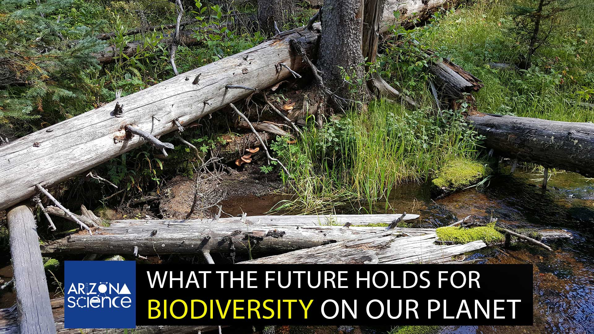 What the future holds for biodiversity on our planet